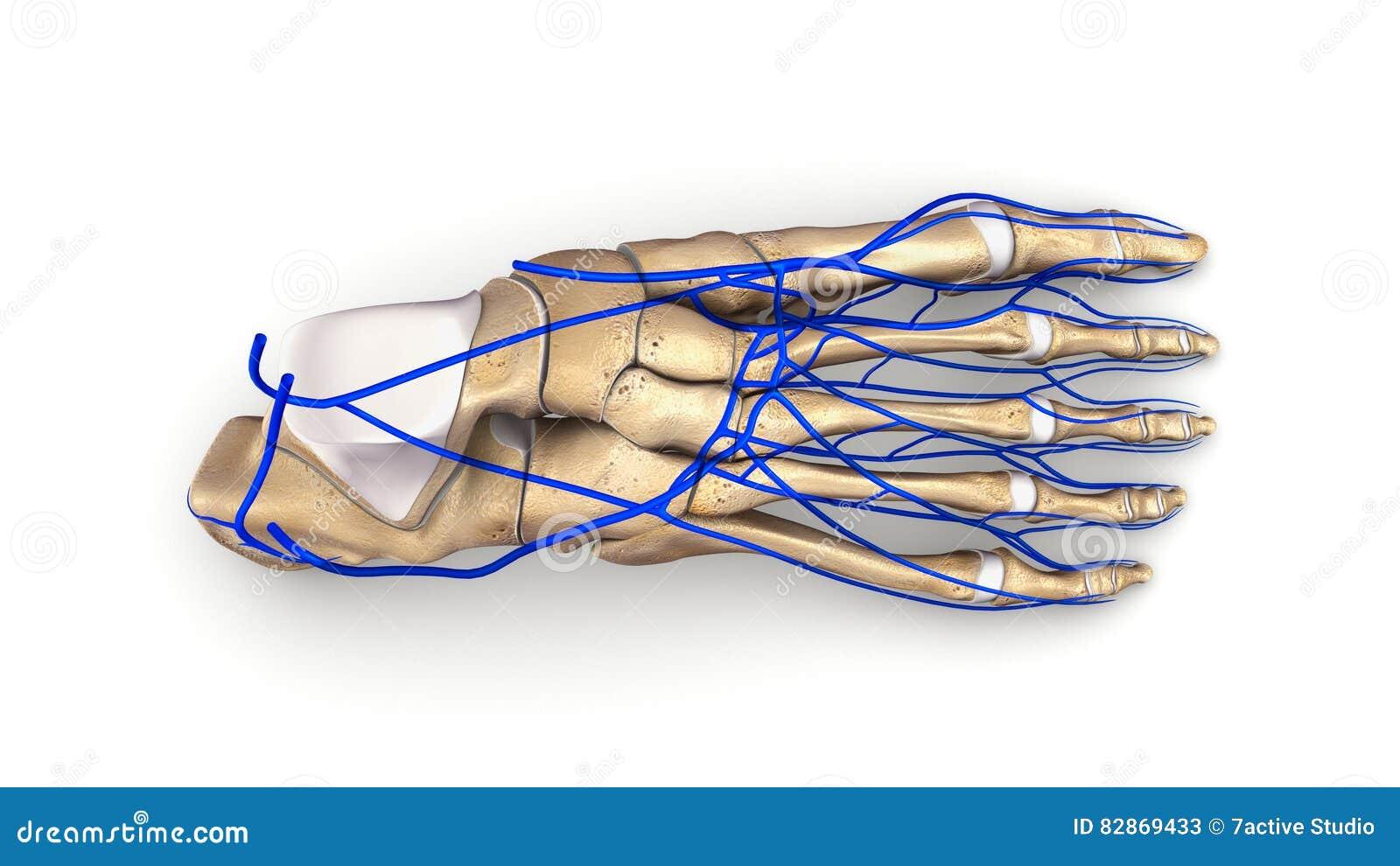 Gemorroidalnye los nudos la trombosis