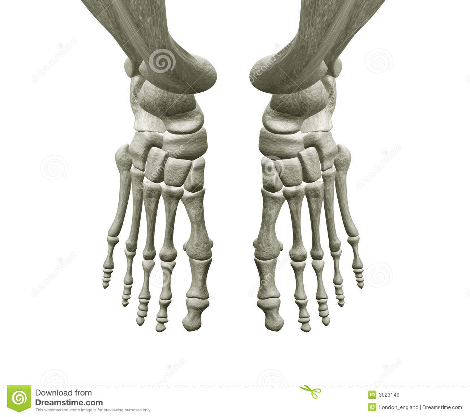 Radiografía Del Pie Izquierdo Imagen de archivo - Imagen de hospital ...