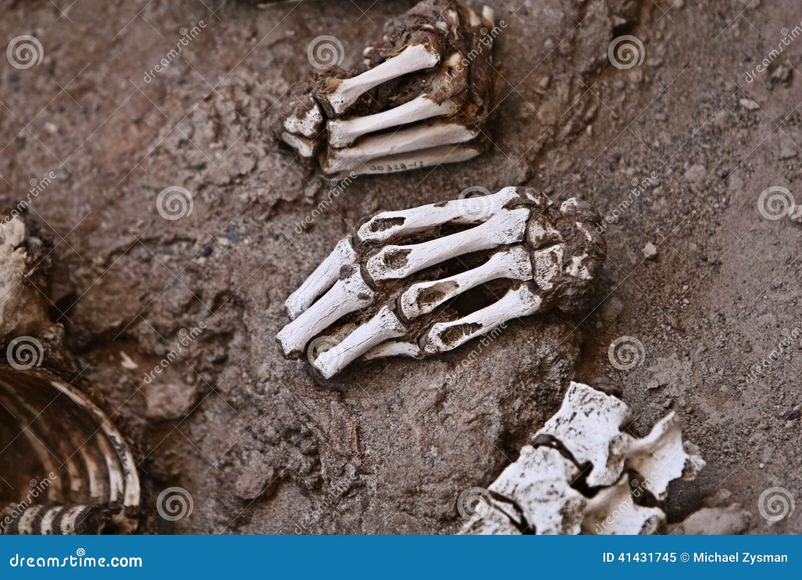 Huesos Humanos Antiguos - Manos Y Vértebras Imagen de archivo ...