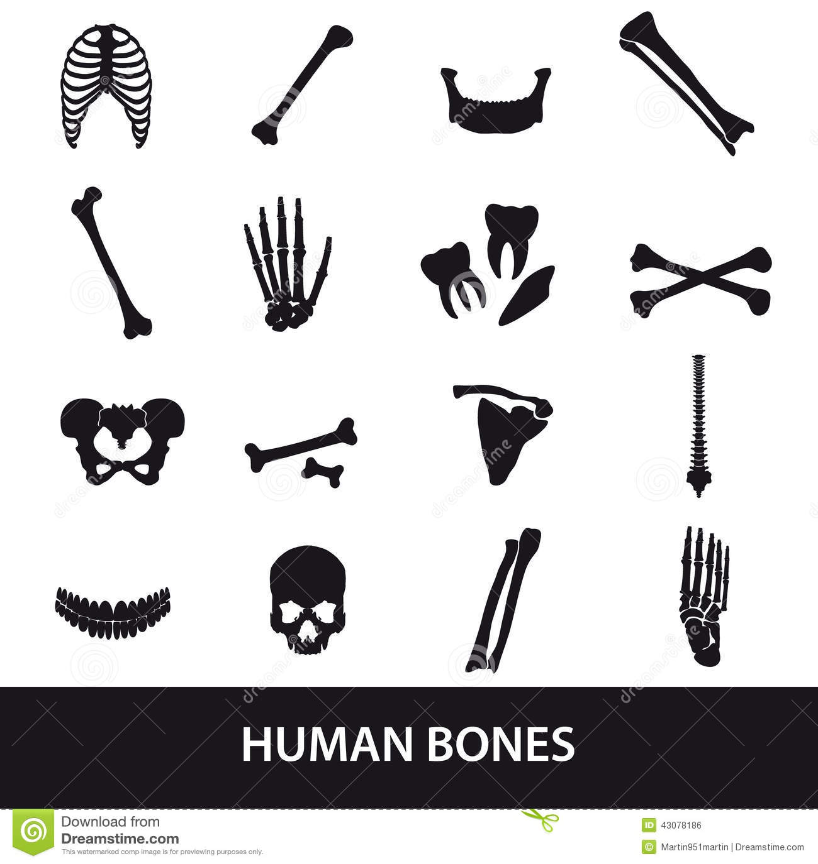 Huesos Humanos Fijados De Iconos Ilustración del Vector ...