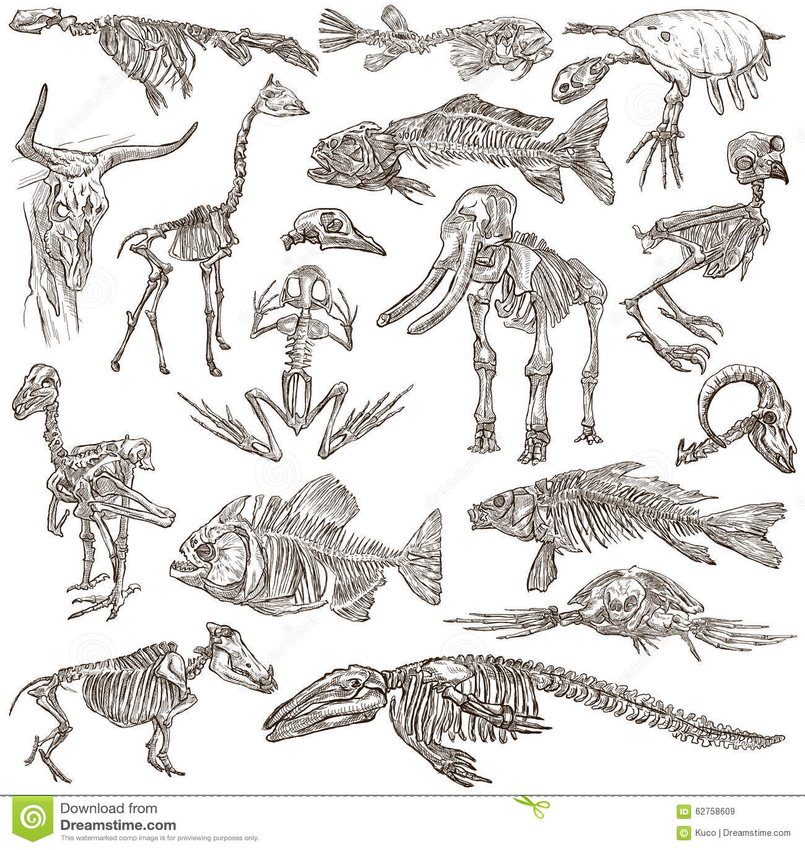 Huesos Y Cráneos De Diversos Animales - Freehands Stock de ...