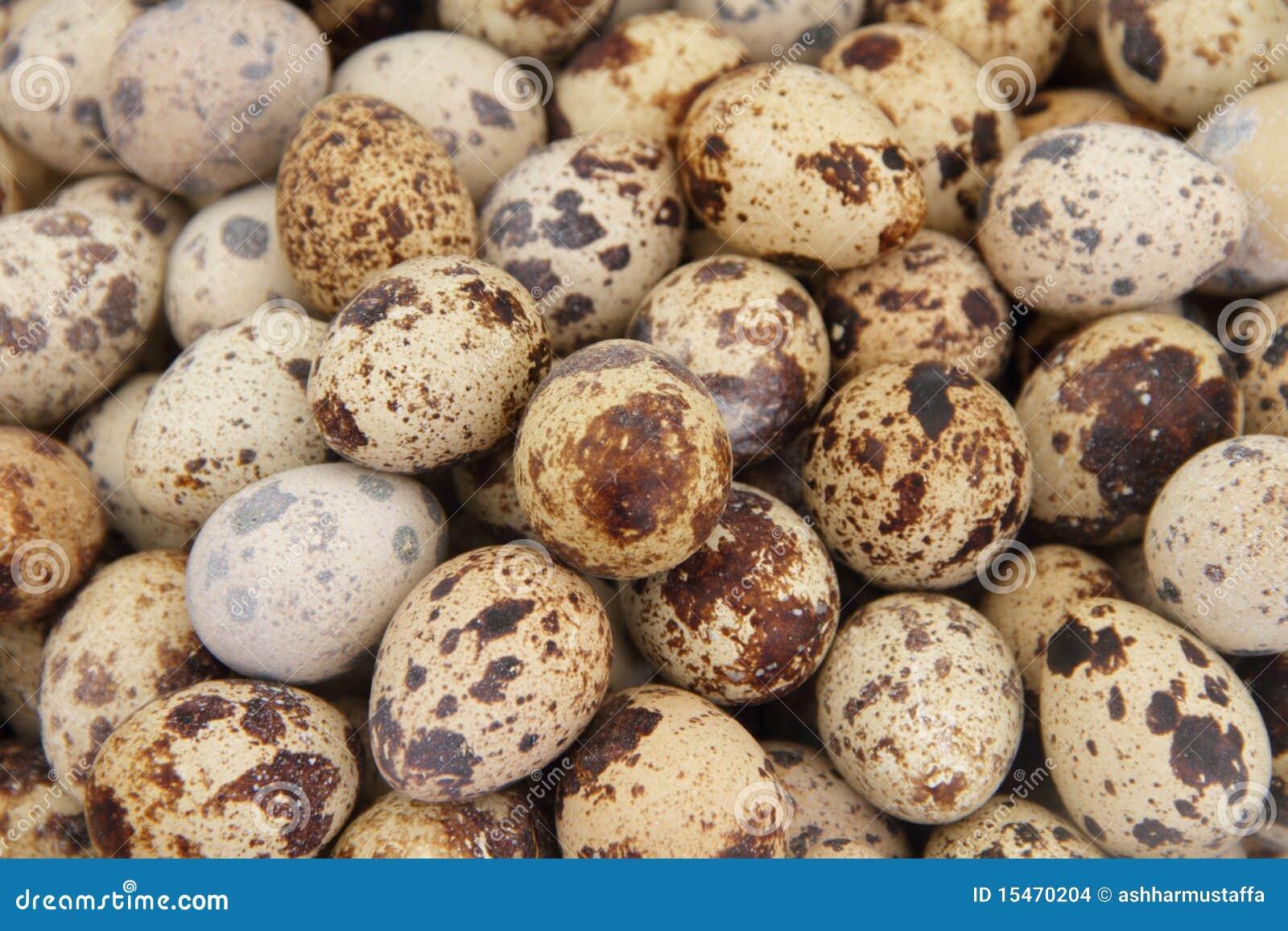 Huevos de codornices imagenes de archivo imagen 15470204 for Cocinar huevos 7 days to die