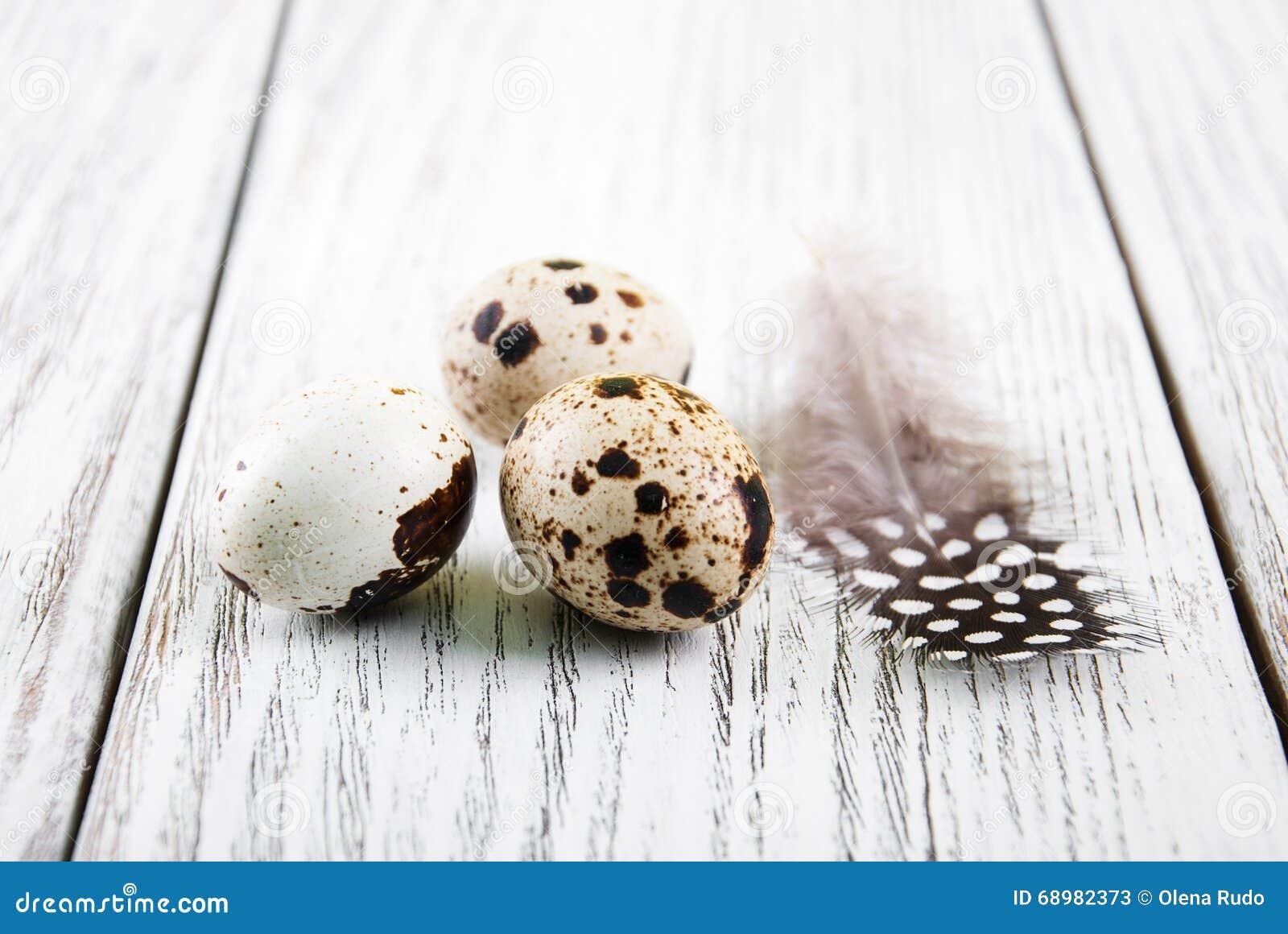 Huevos de codornices con la pluma