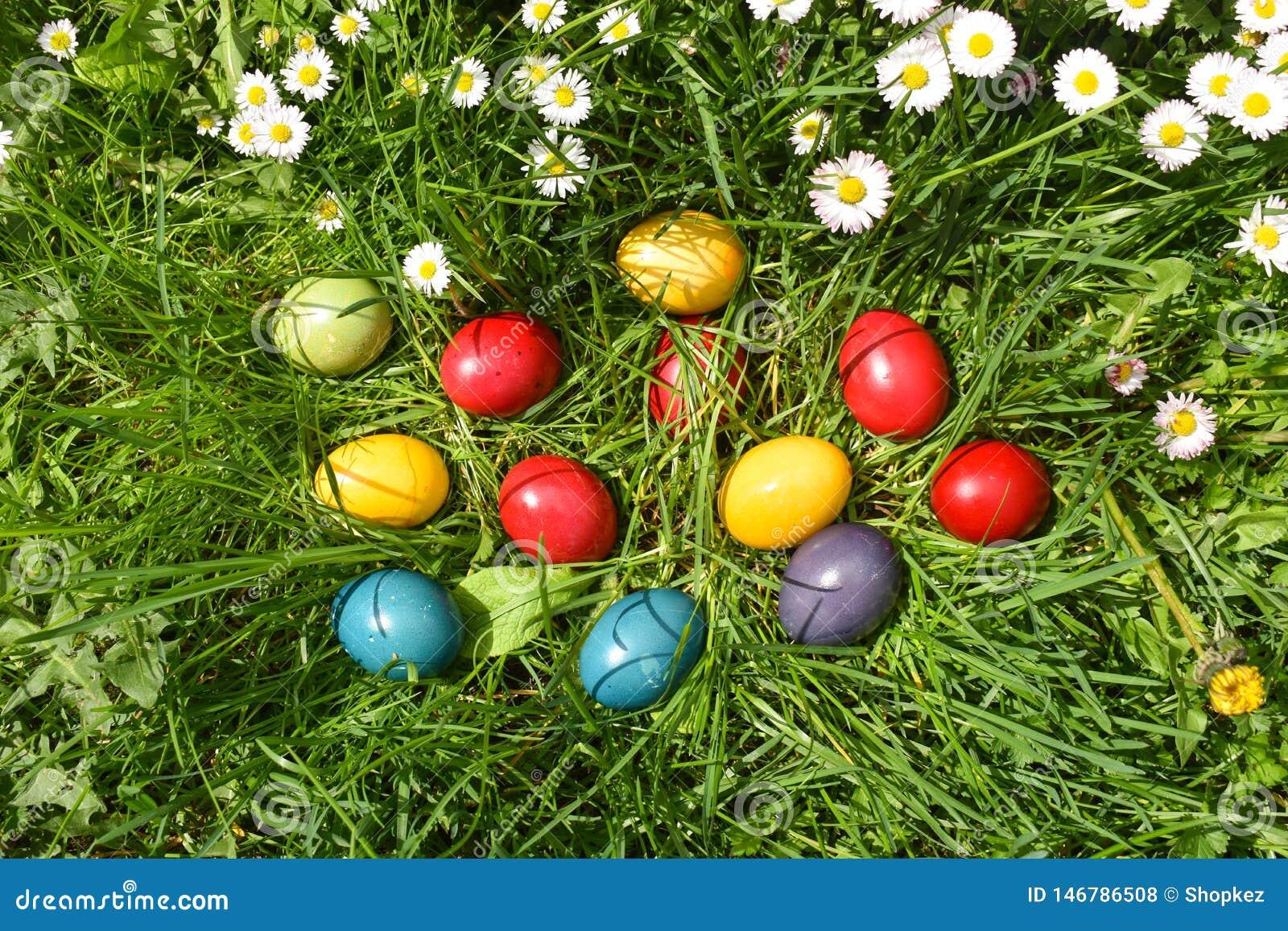 Huevos de Pascua coloridos en la hierba verde con las flores blancas de la primavera