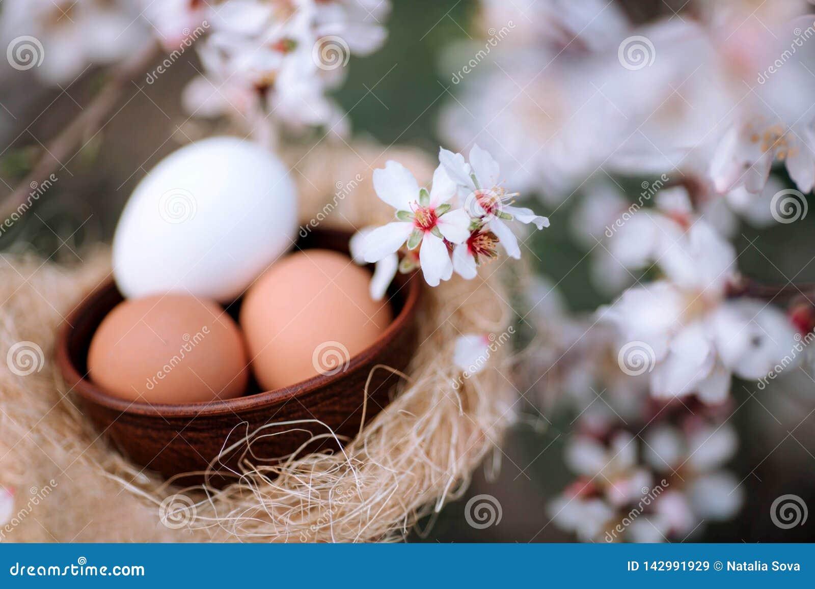 Huevos para Pascua contra el contexto de un árbol floreciente de la primavera
