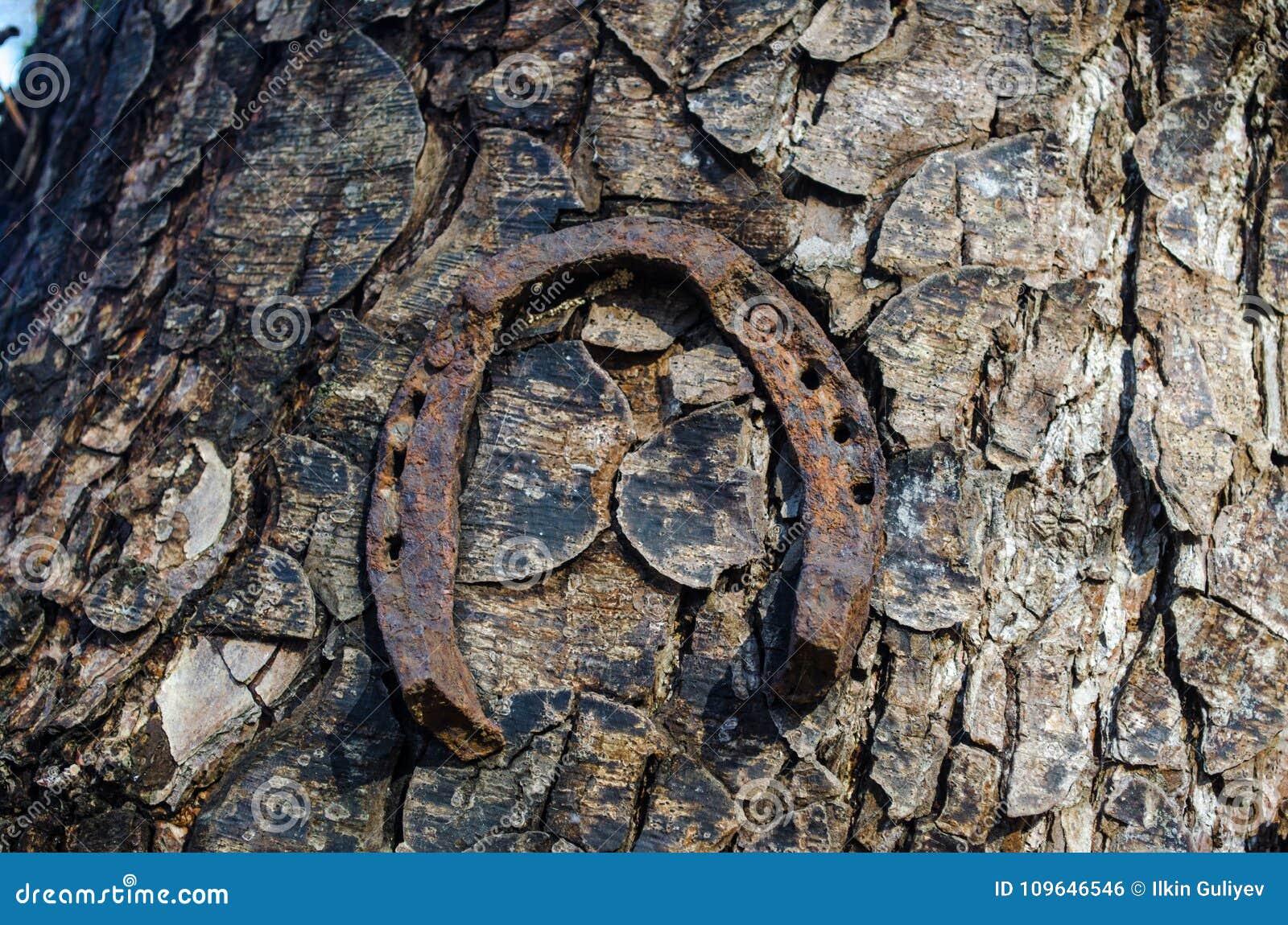 Hufeisensee Trailhead Drei alte rostige Hufeisen, die an einem Baumstamm hängen