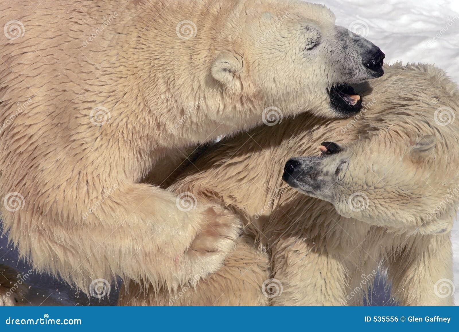 Hug de urso 2