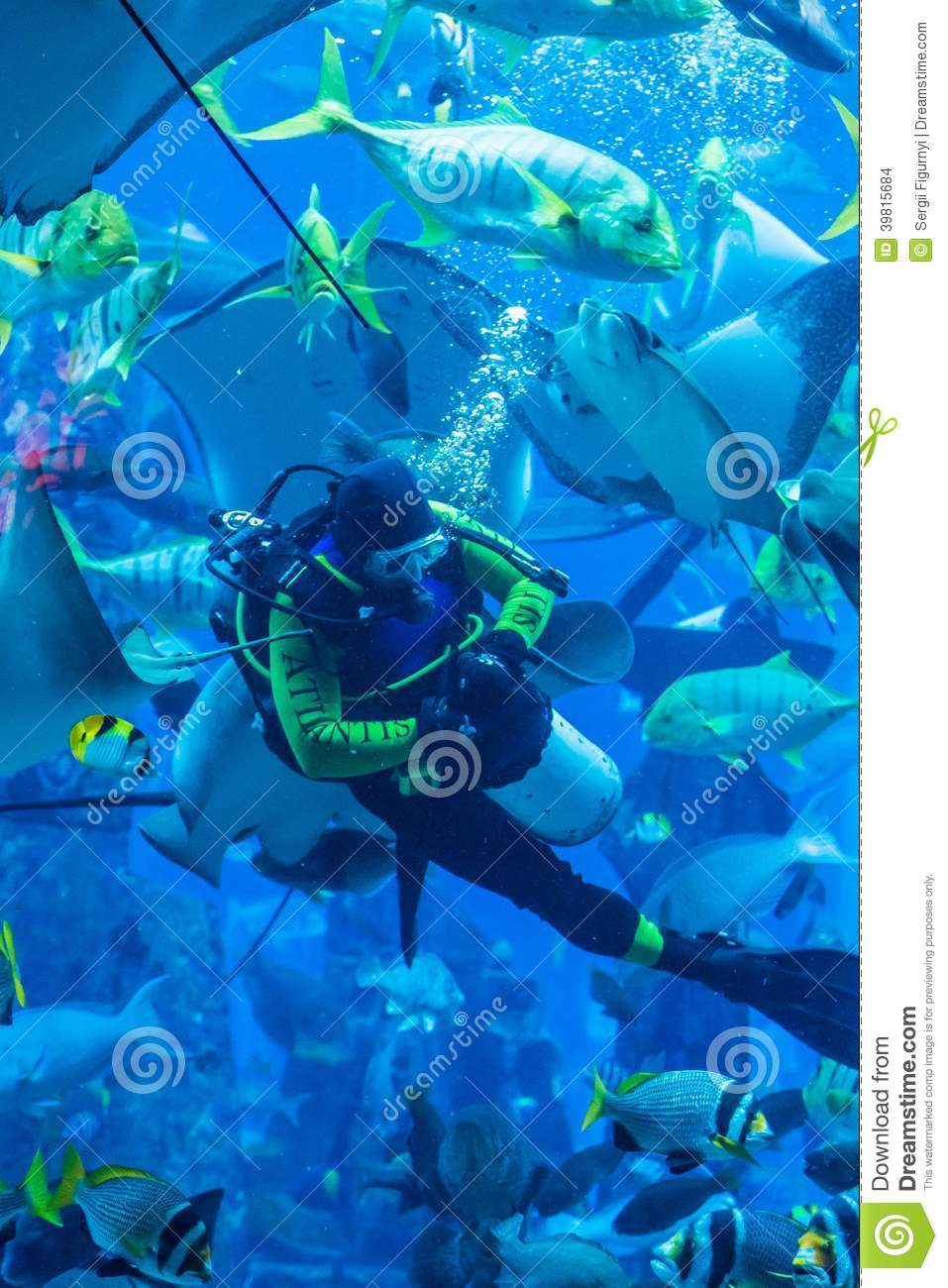 Fish aquarium in uae - Huge Aquarium In Dubai Diver Feeding Fishes Editorial Stock Image