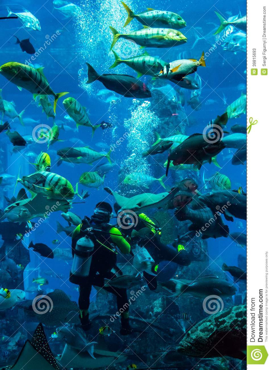 Fish aquarium in uae - Huge Aquarium In Dubai Diver Feeding Fishes Editorial Stock Photo