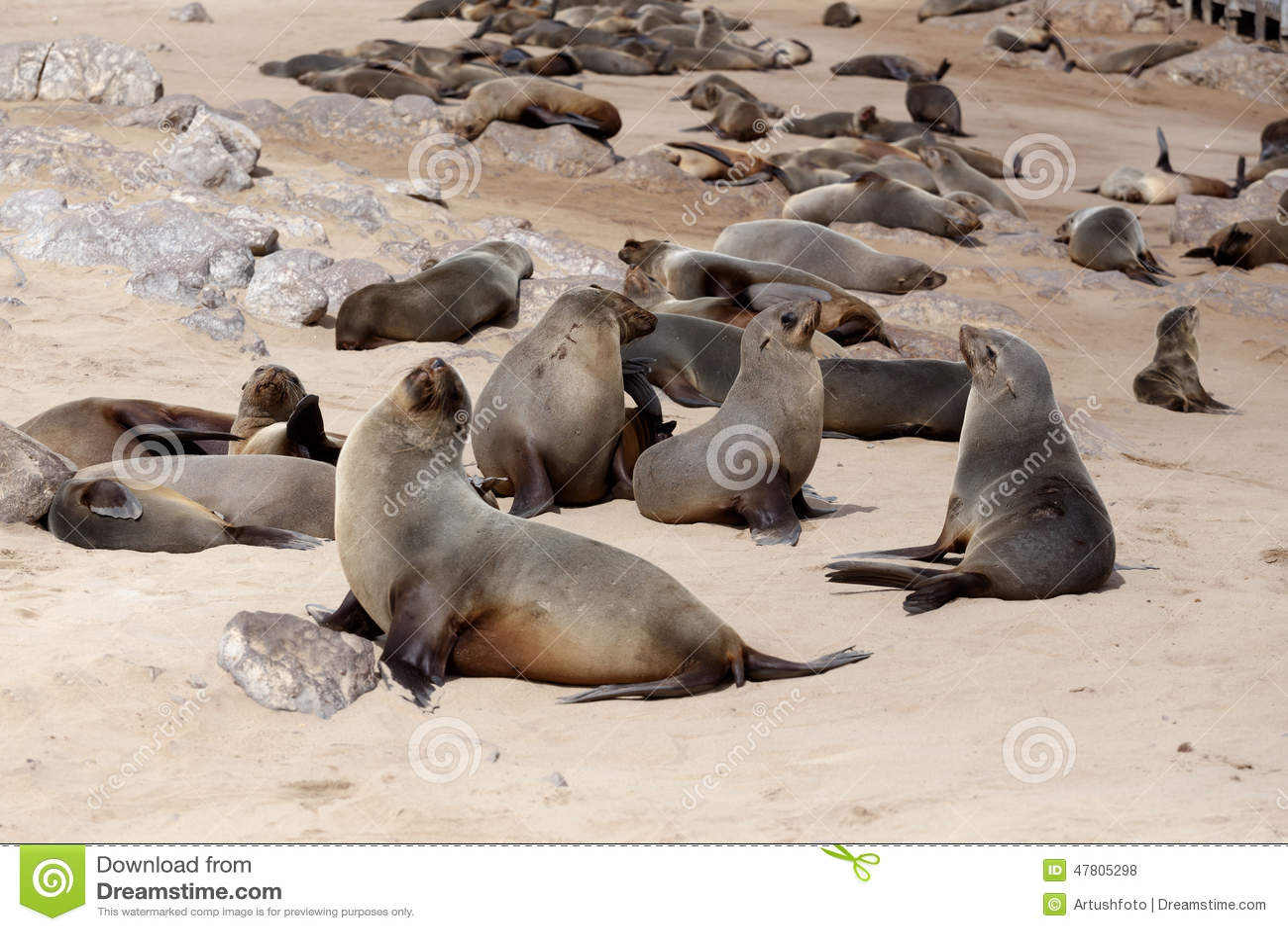 fur seal vs sea lion - DriverLayer Search Engine