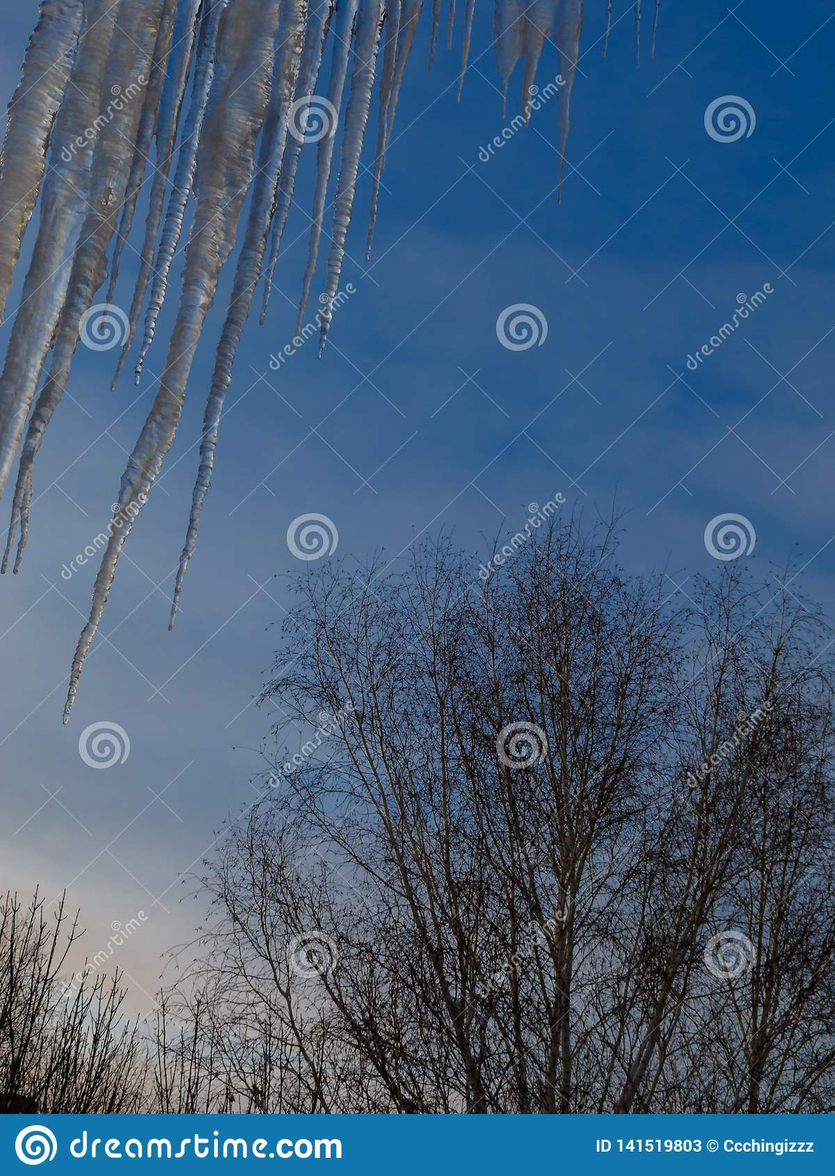 Huge icicles of ice hang from the roof against the blue sky and the treetops. Vertical orientation.