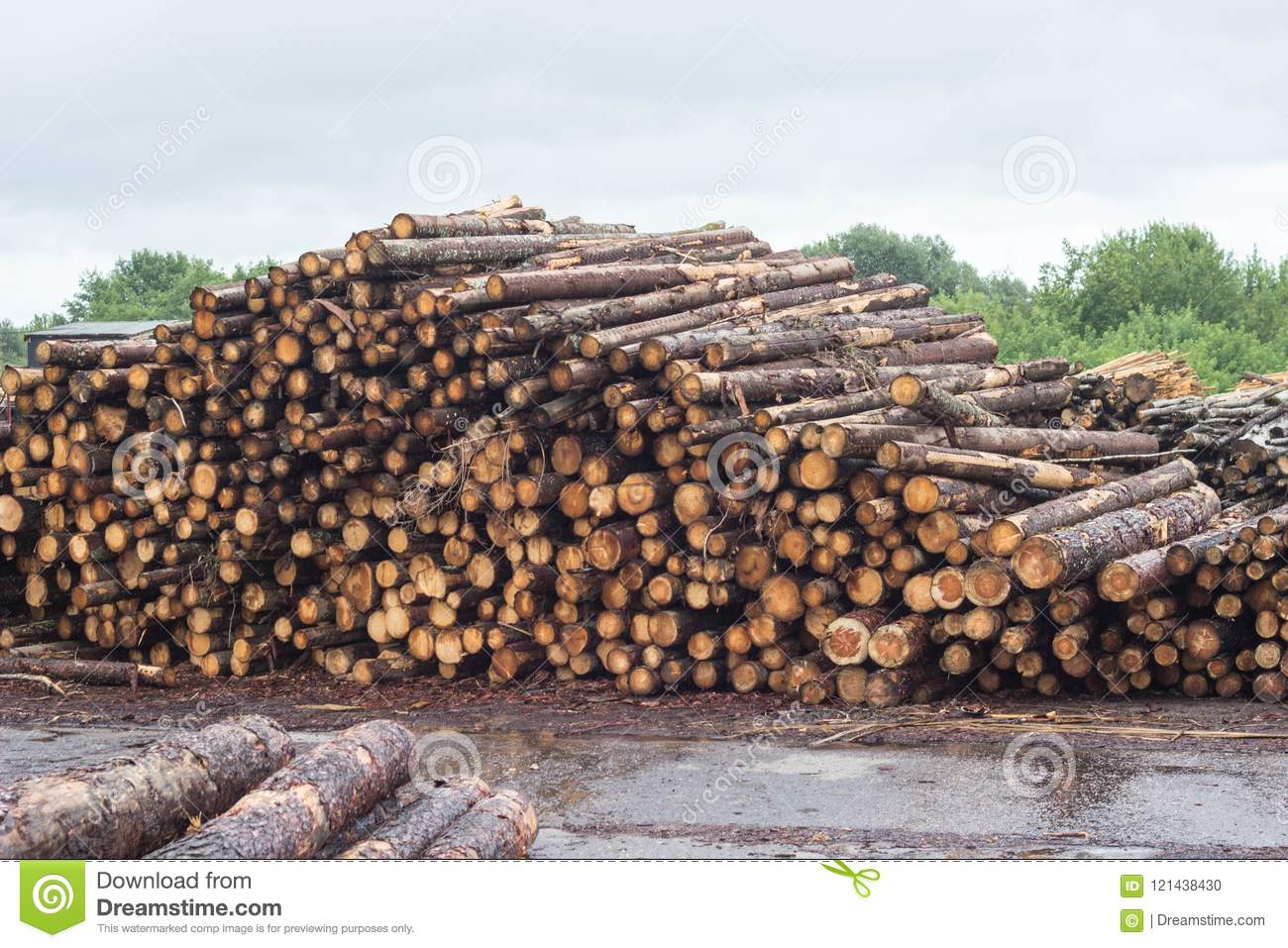 A huge pile of logs from the forest, a sawmill, timber for export, log