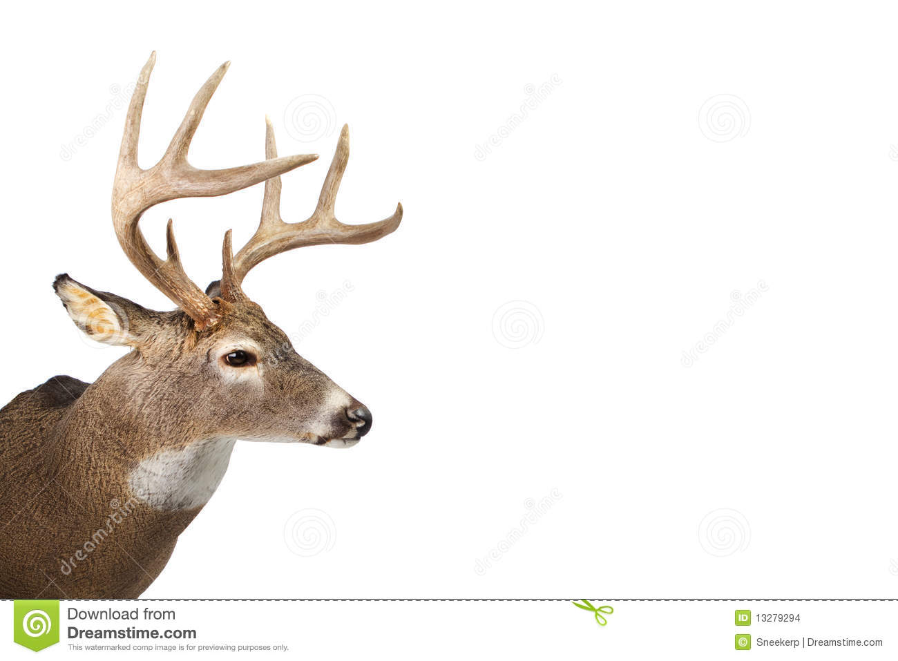 Huge whitetail buck isolated on white background stock photo huge whitetail buck isolated on white background voltagebd Image collections