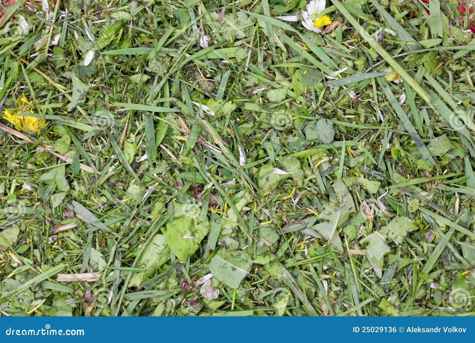 Huggen av gräsgreenlawn