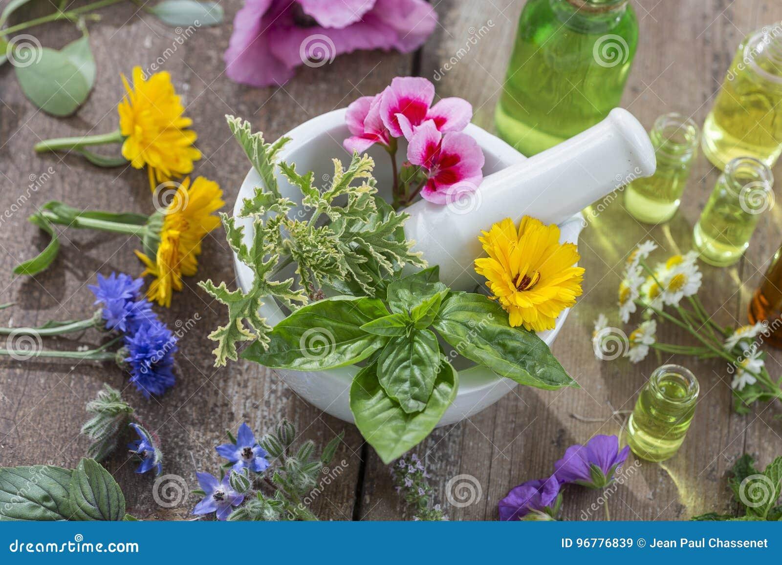 Huiles essentielles pour le traitement d aromatherapy avec les herbes fraîches à l arrière-plan de blanc de mortier