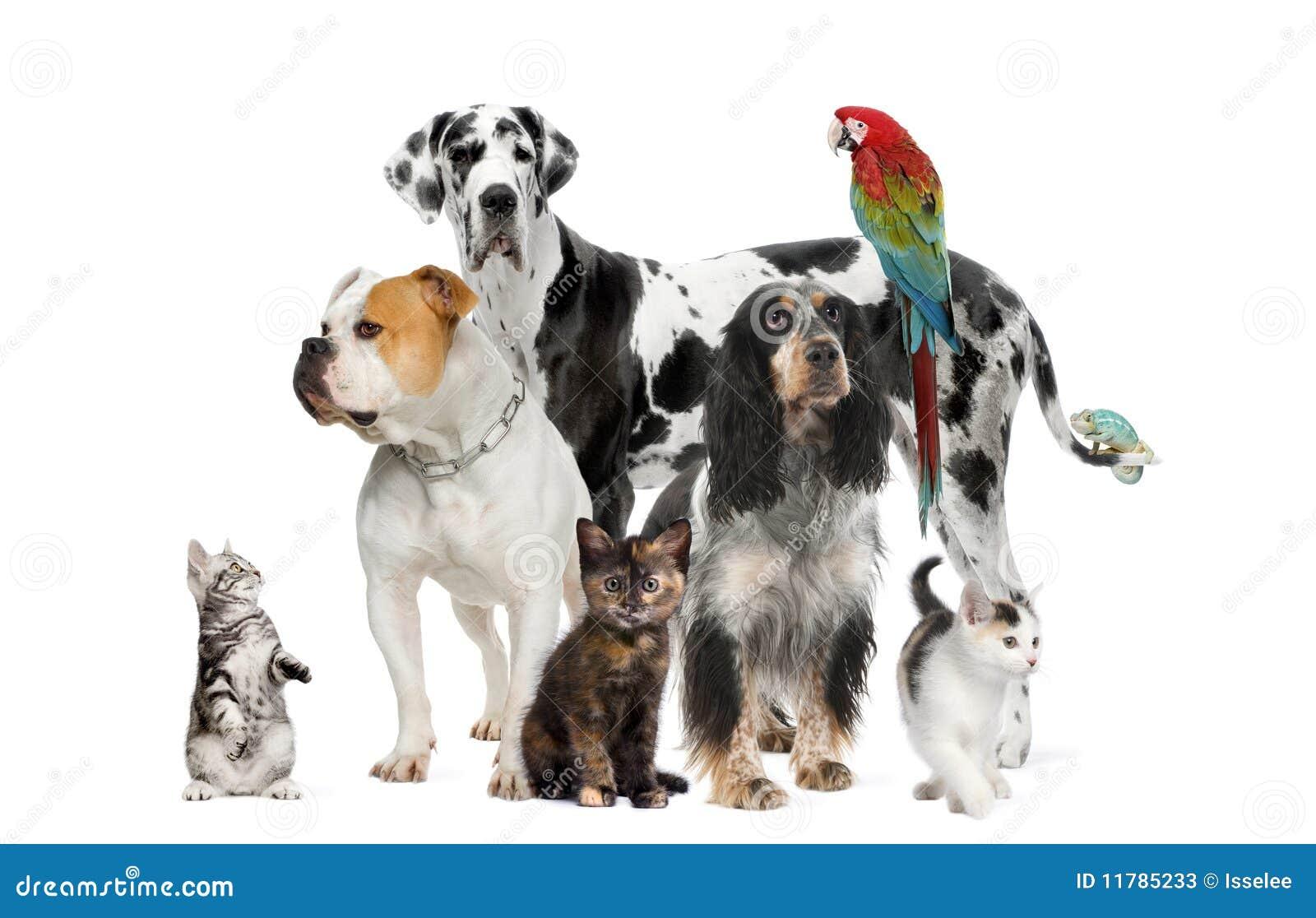 Huisdieren die zich voor witte achtergrond bevinden