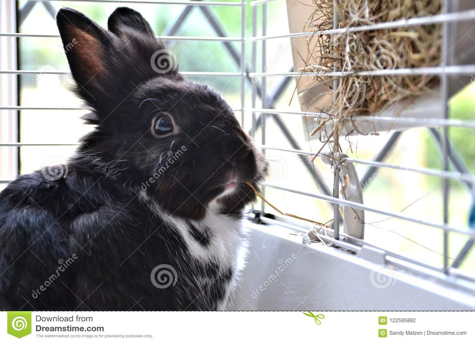 Huisdierenkonijntje voor zijn hooiautomaat