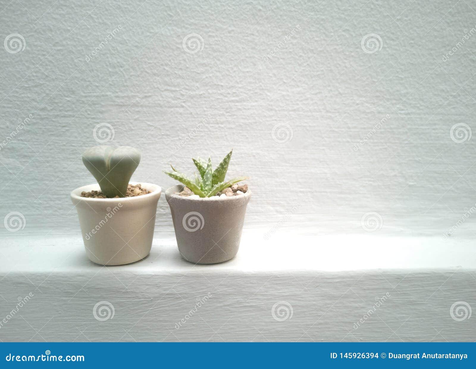 Huisinstallaties, succulents, cactus en binnen ingemaakte installaties en botanisch voor de binnentuin - beeld