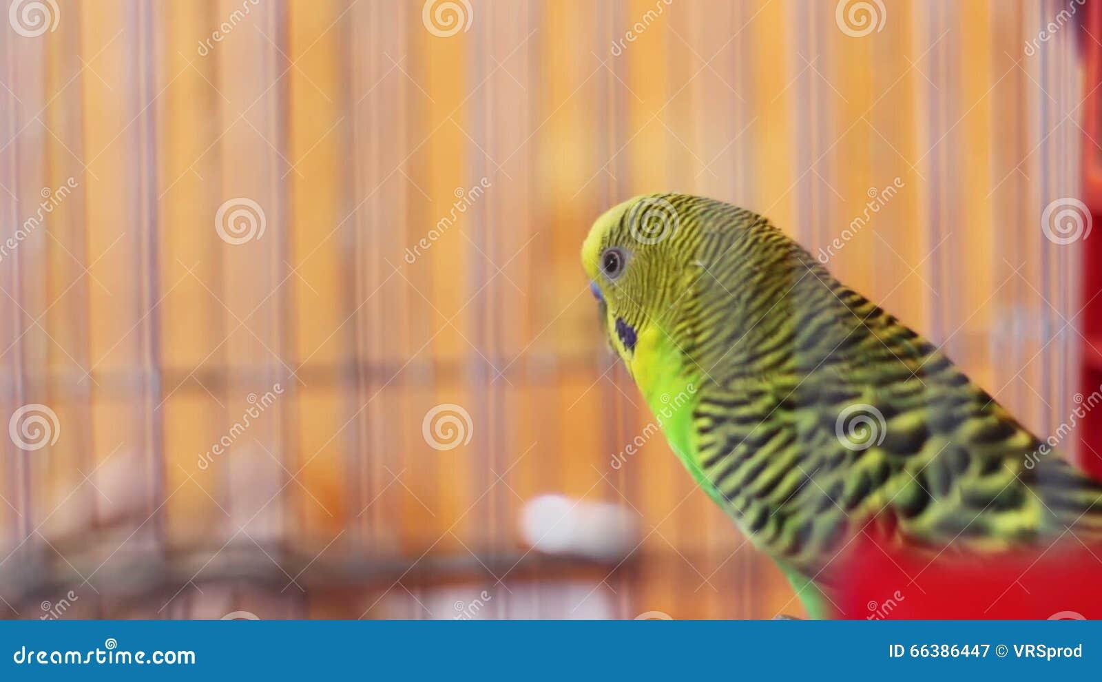 Vogelkooi In Huis : Waar kan ik de vogelkooi voor mijn grasparkiet het bestu beest