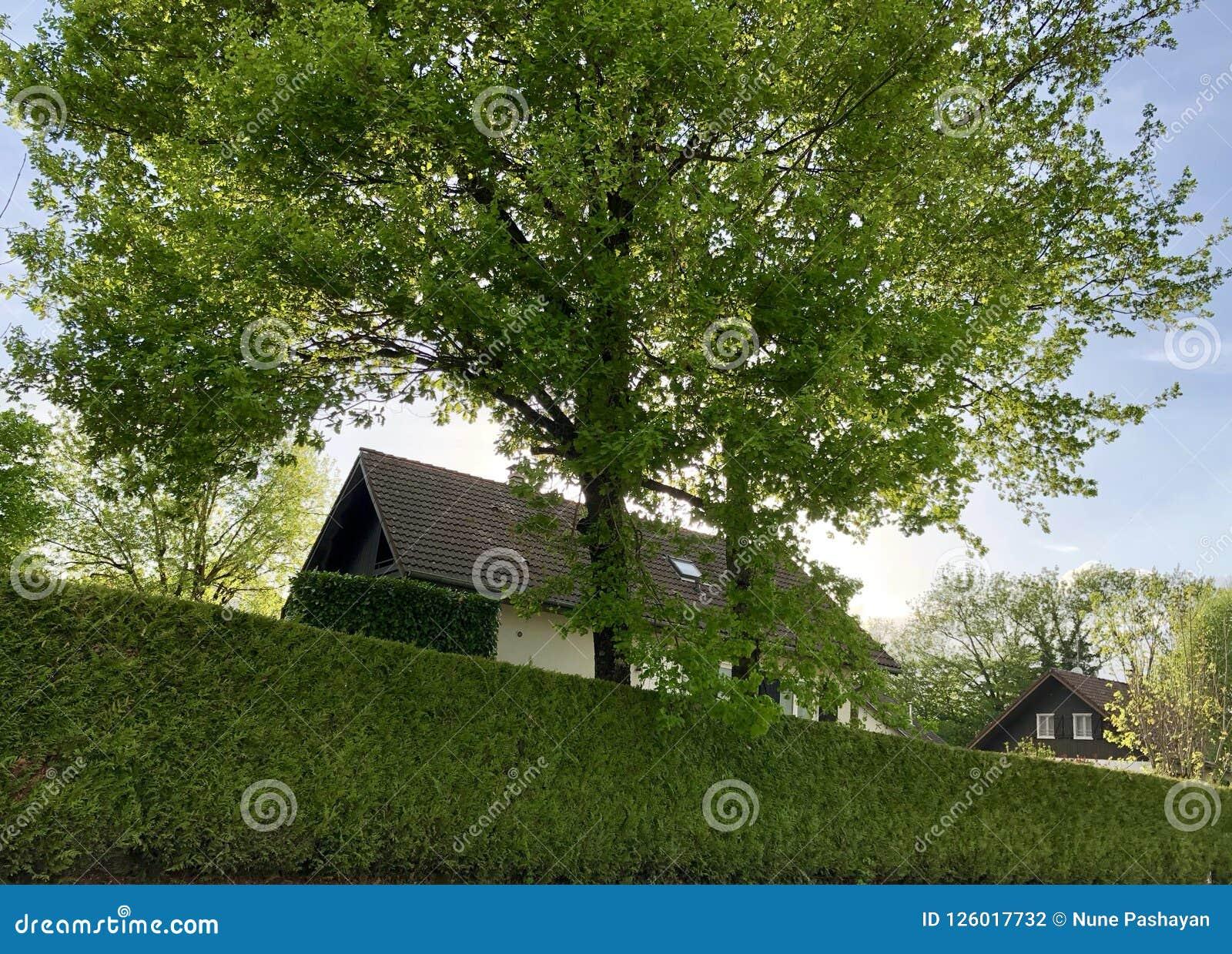 Huizen en groene haag in Frankrijk