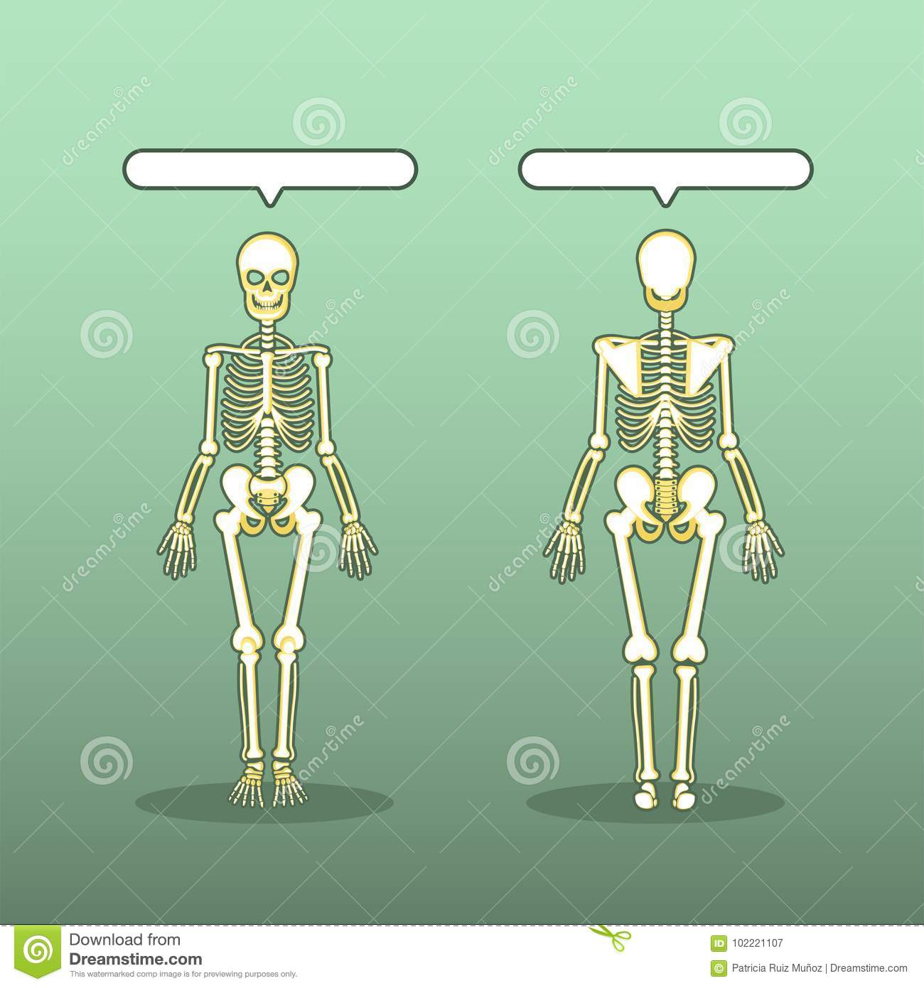 Skeletom Human Body Anatomy Stock Vector Illustration Of Clavicle