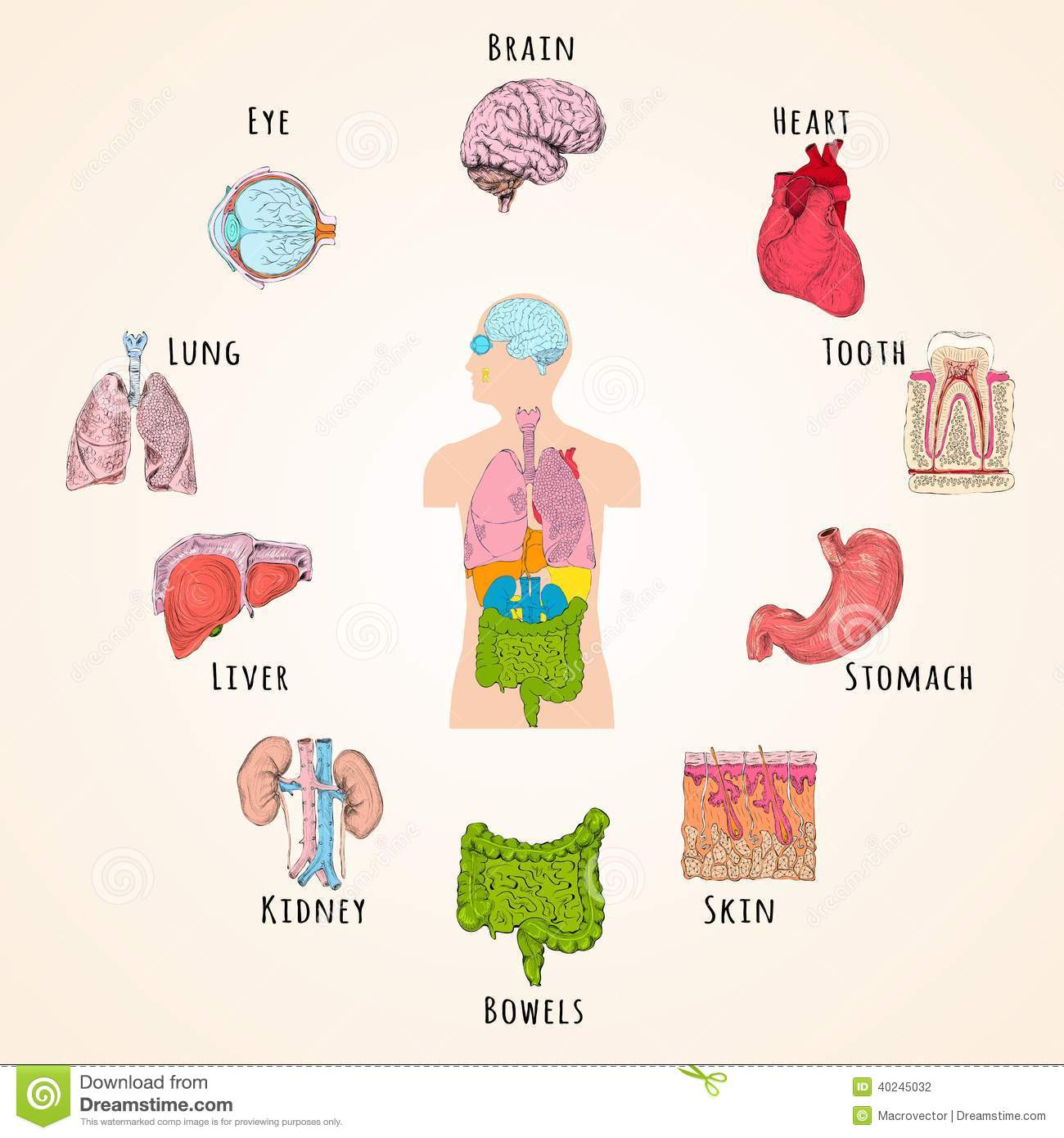 human anatomy icons stock illustrations 9 245 human anatomy icons stock illustrations vectors clipart dreamstime dreamstime com