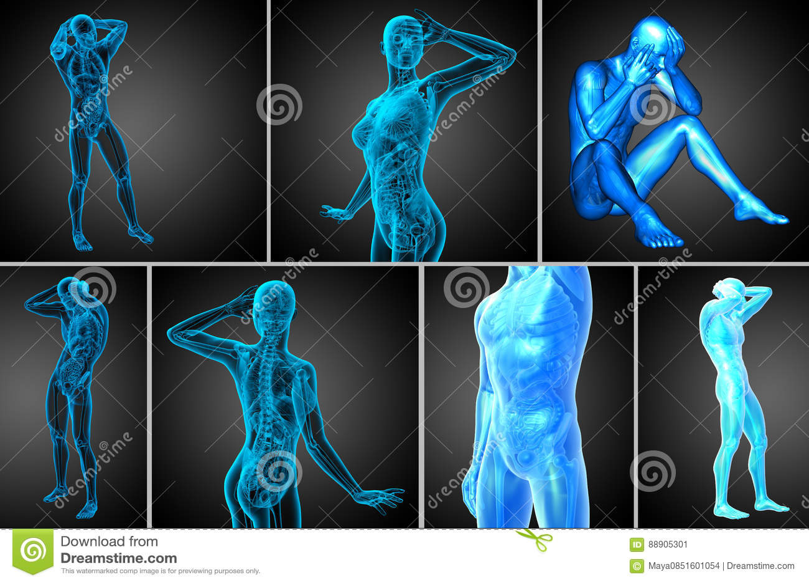 Human Anatomy Stock Illustration Illustration Of Health 88905301