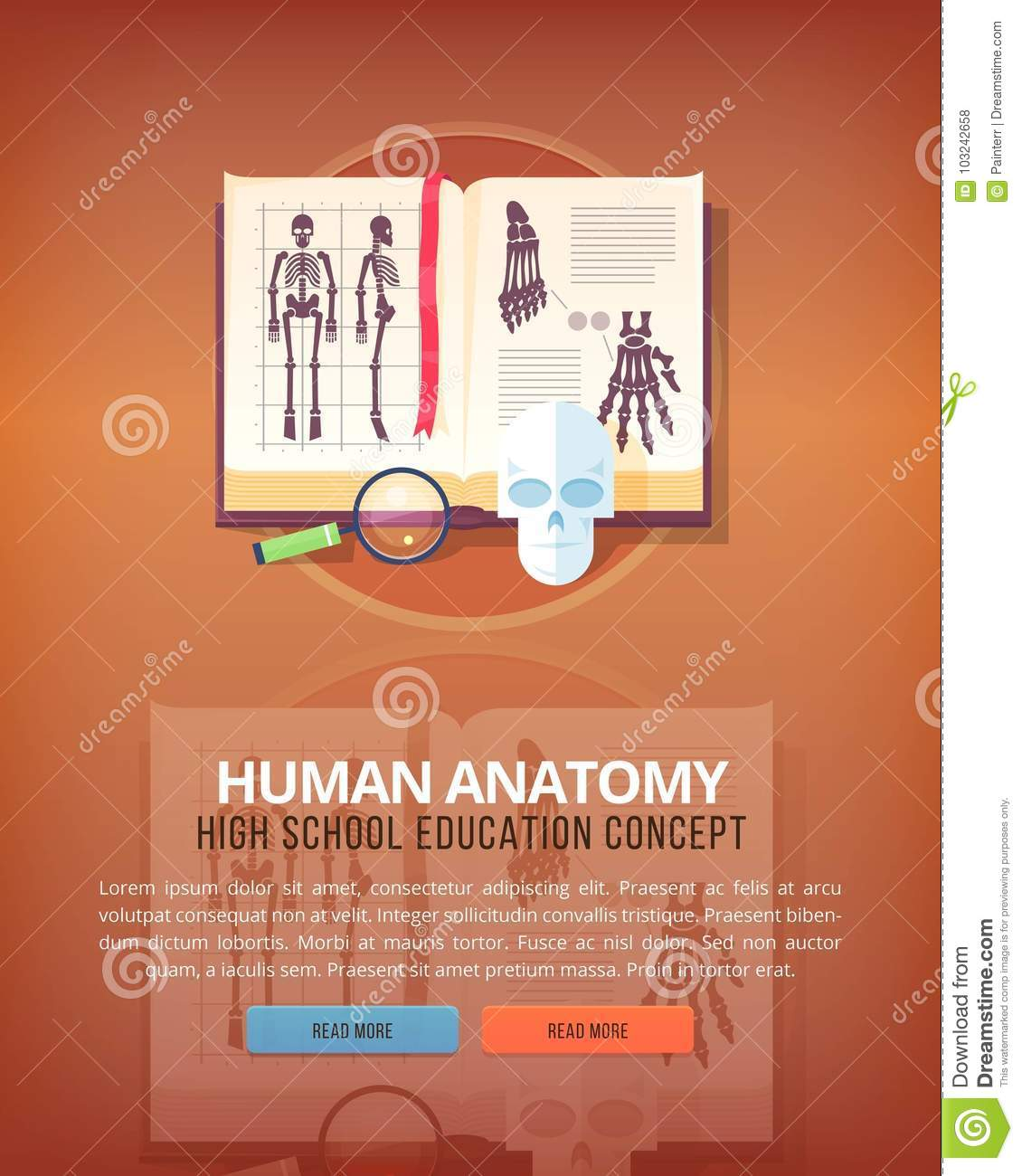 Human Anatomy Education And Science Vertical Layout Concepts Flat