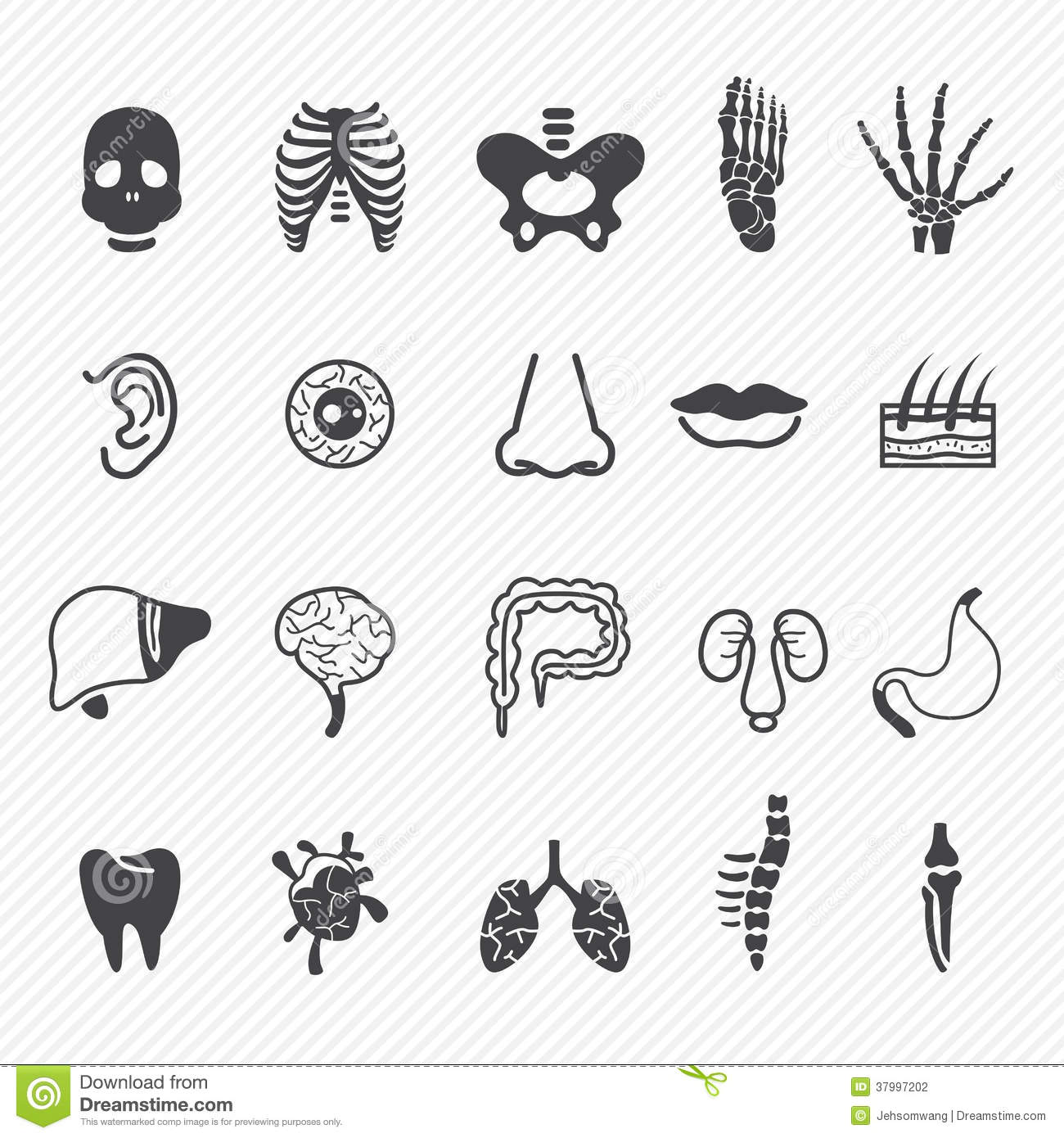 Human Anatomy Icons Stock Vector Illustration Of Brain 37997202
