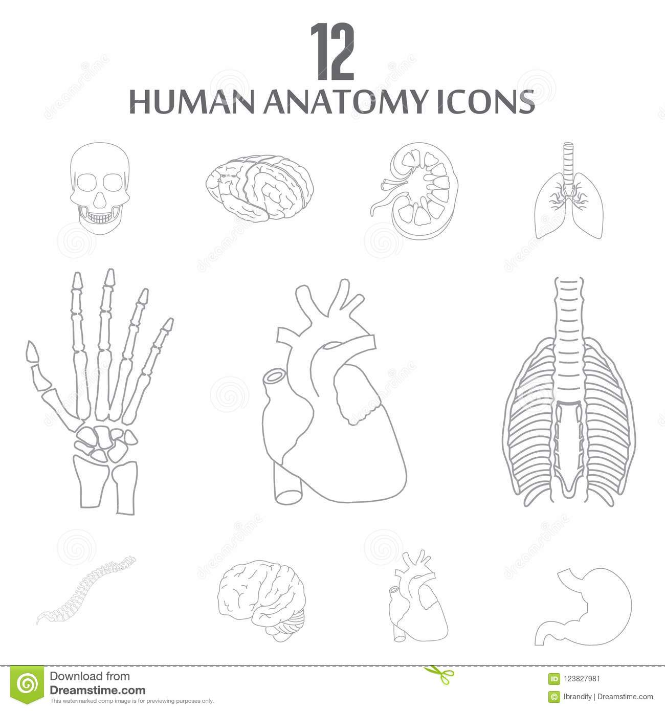Human Anatomy Icons Set Vector Stock Vector - Illustration of ...