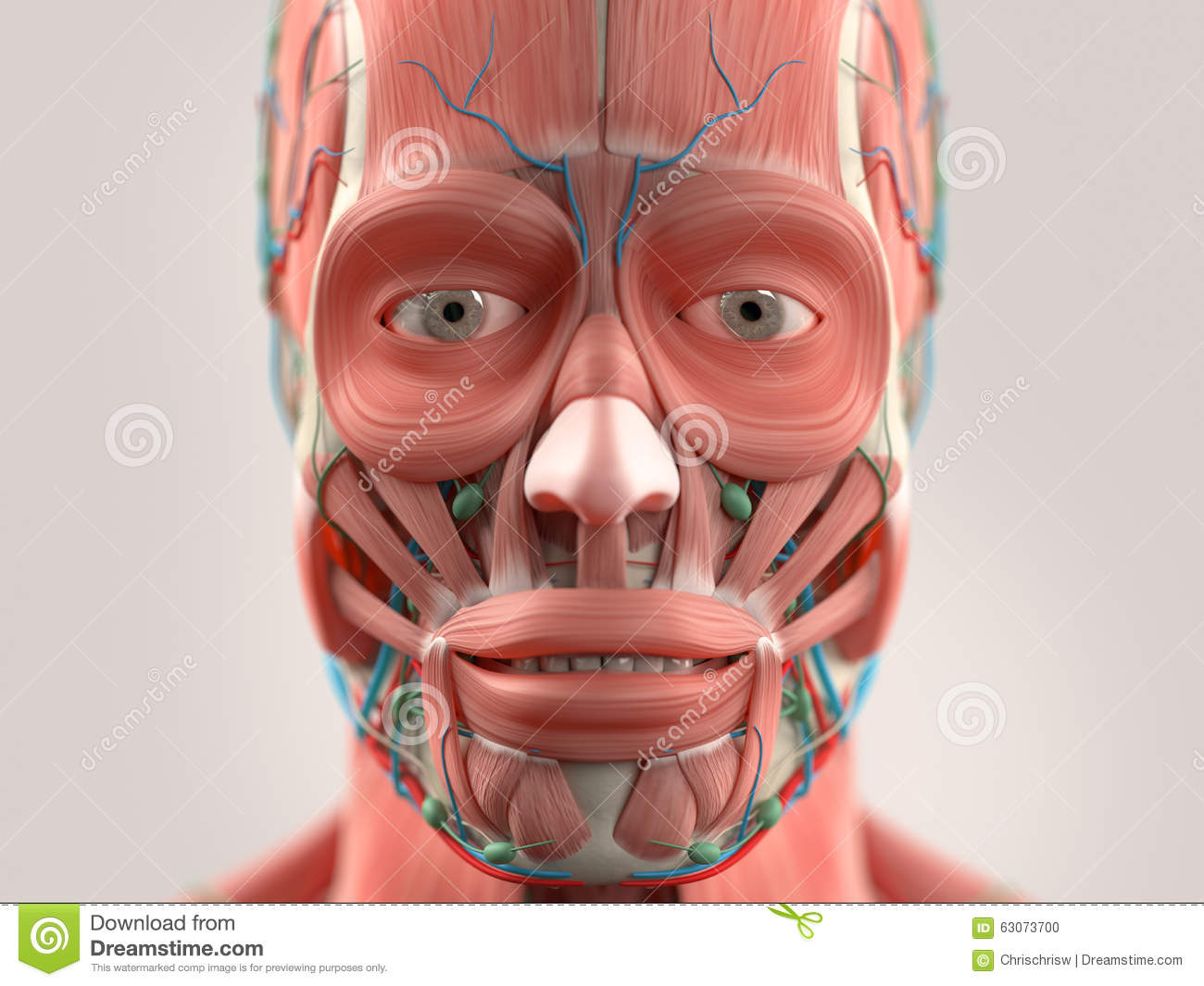 image gallery muscular face