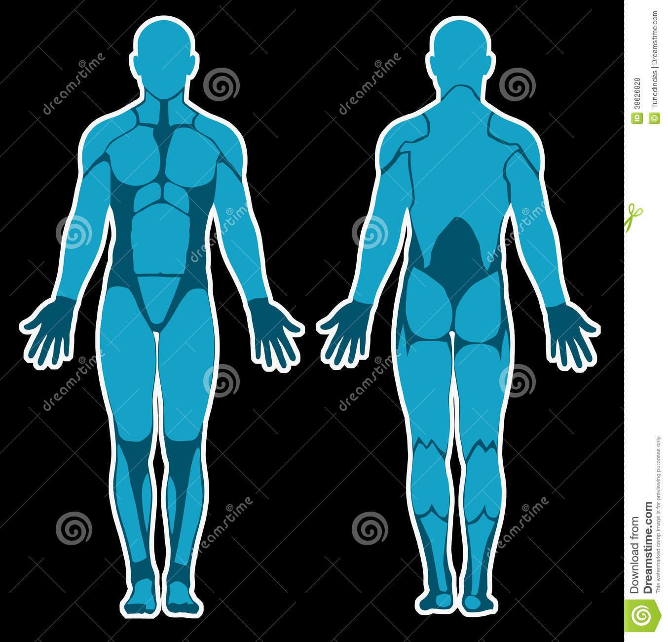 Human anatomy stock illustration illustration of vector 38626828 human anatomy ccuart Images