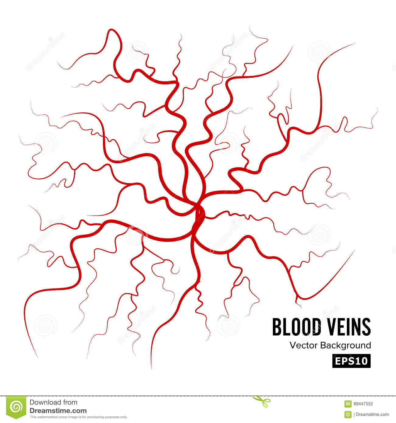Human Blood Veins Vector Blood Arteries Isolated On White Blood