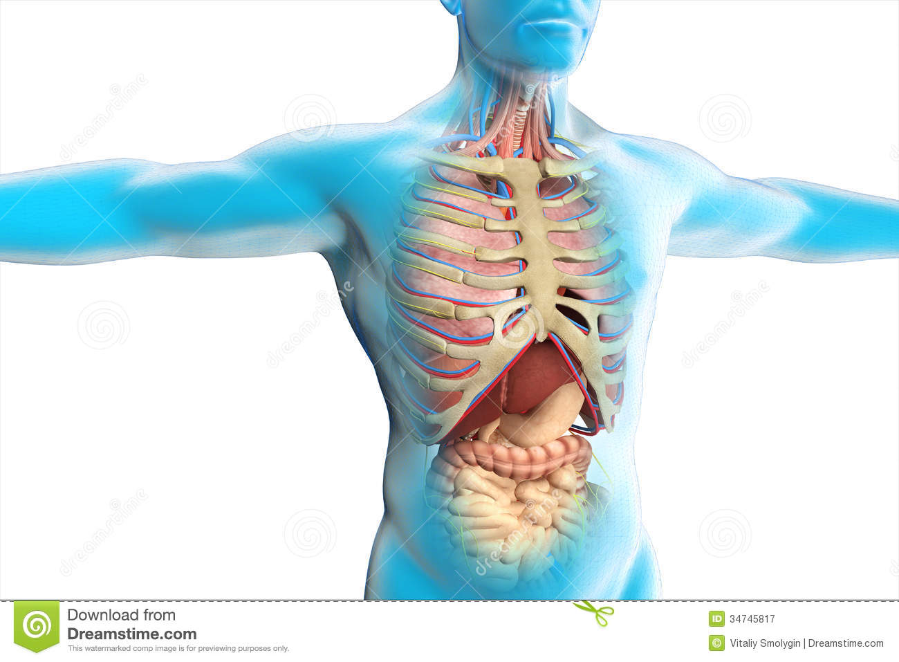 The human body anatomy stock illustration. Illustration of created ...