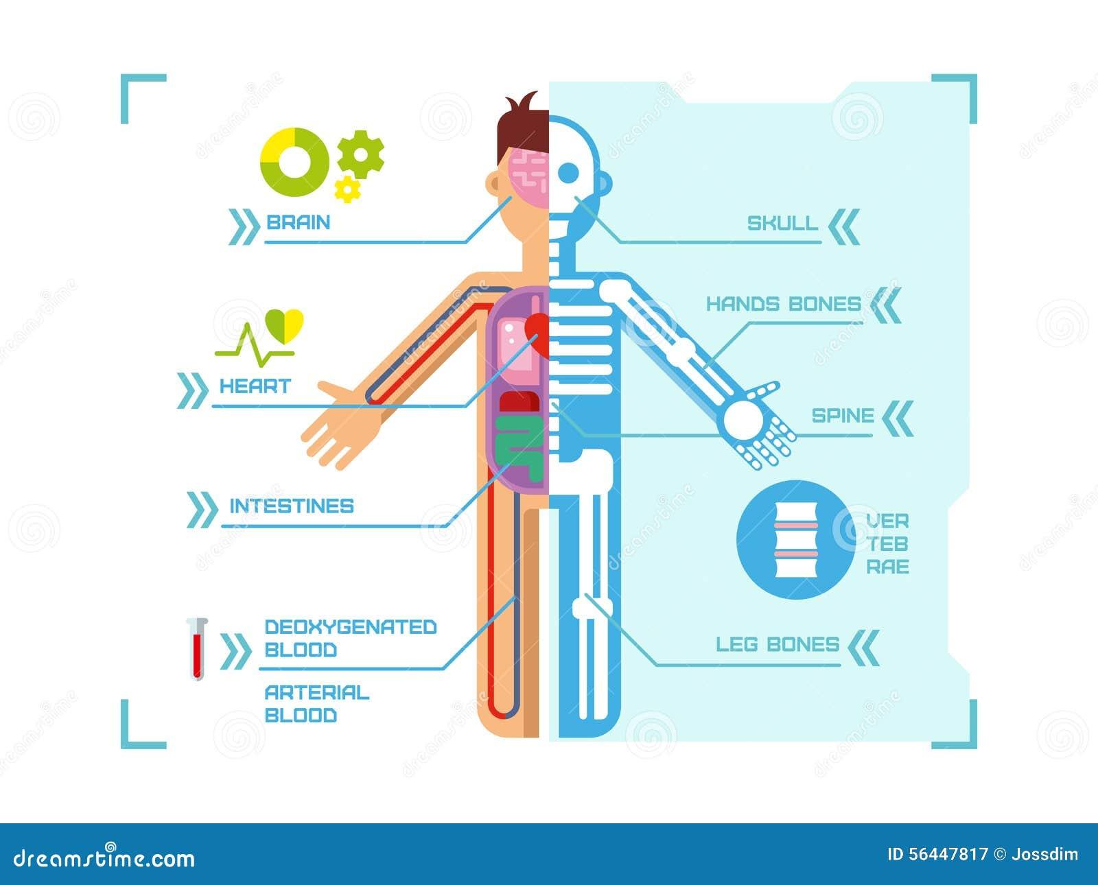 anatomy of human body pdf free download