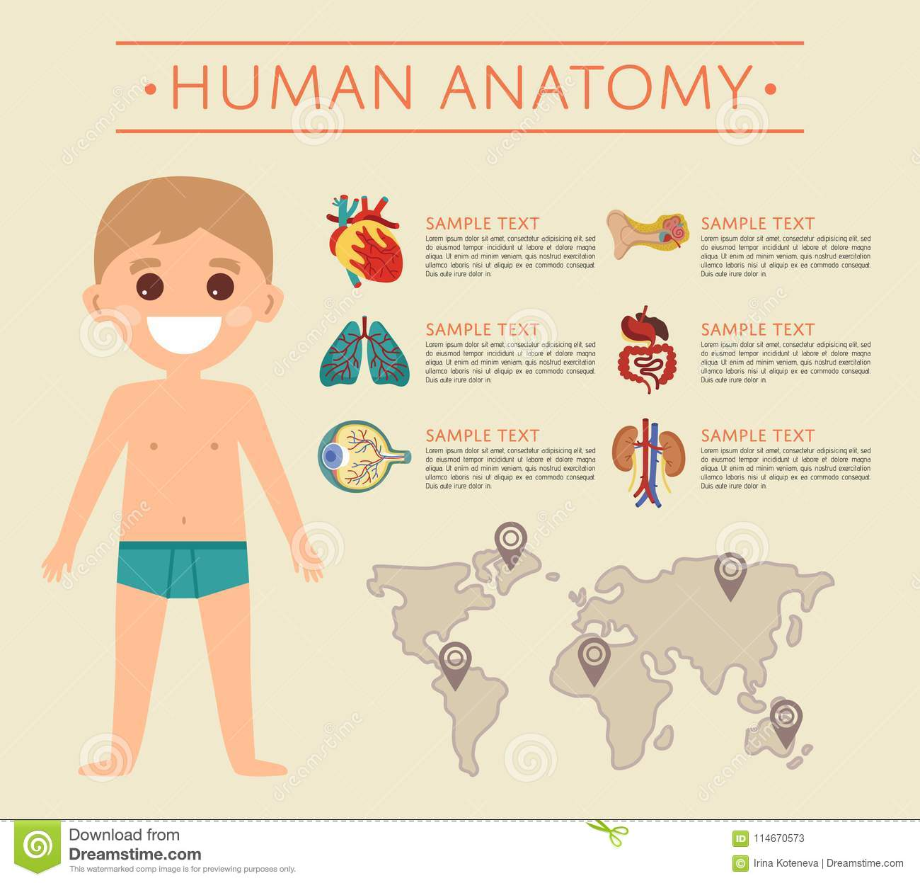Human Body Anatomy Poster With Smiling Kid Stock Illustration ...