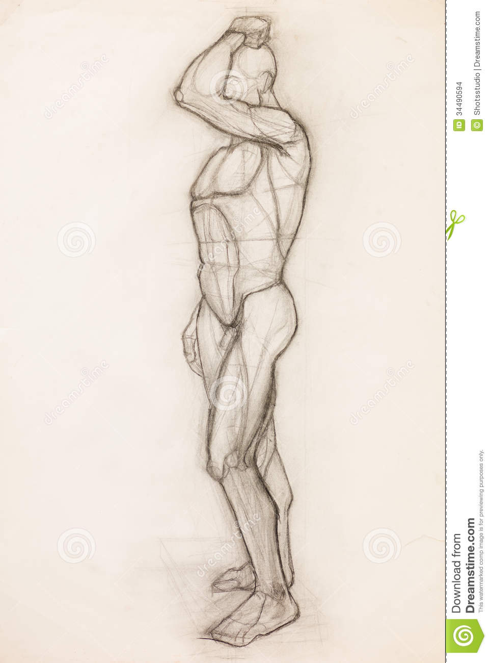 Hand drawn pencil sketch illustrating human body muscles anatomy