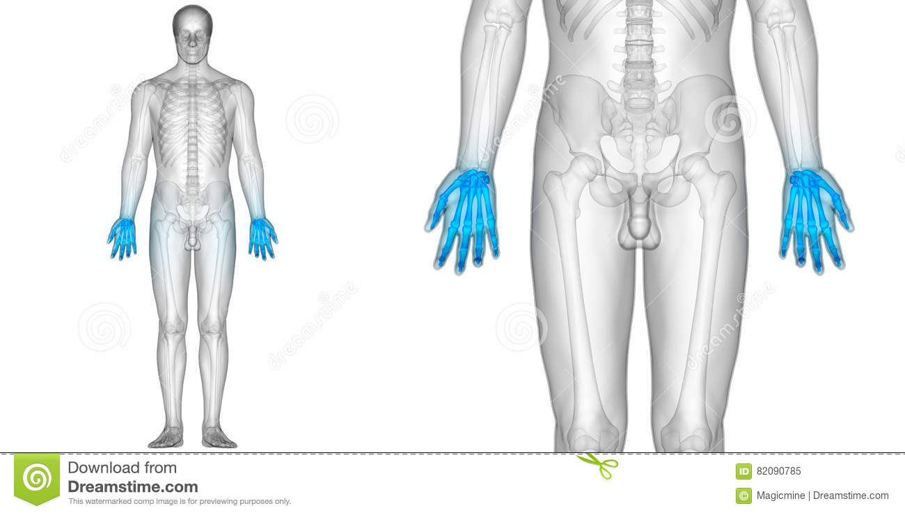 Human Body Bone Joint Pains Anatomy Finger Joints Stock Illustration ...