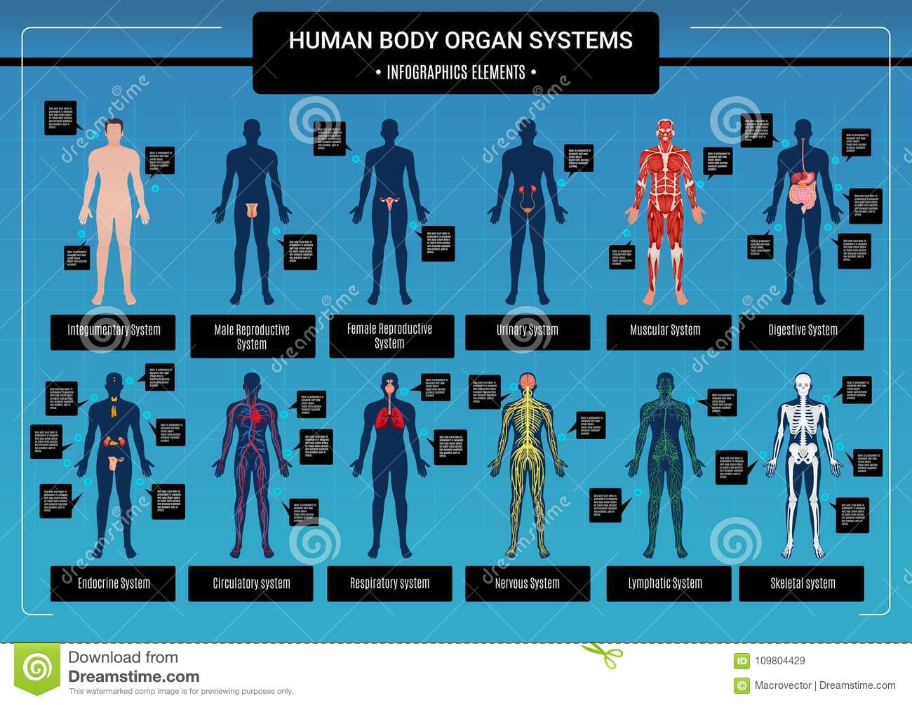 Human Body Infographics Stock Vector Illustration Of Layout 109804429