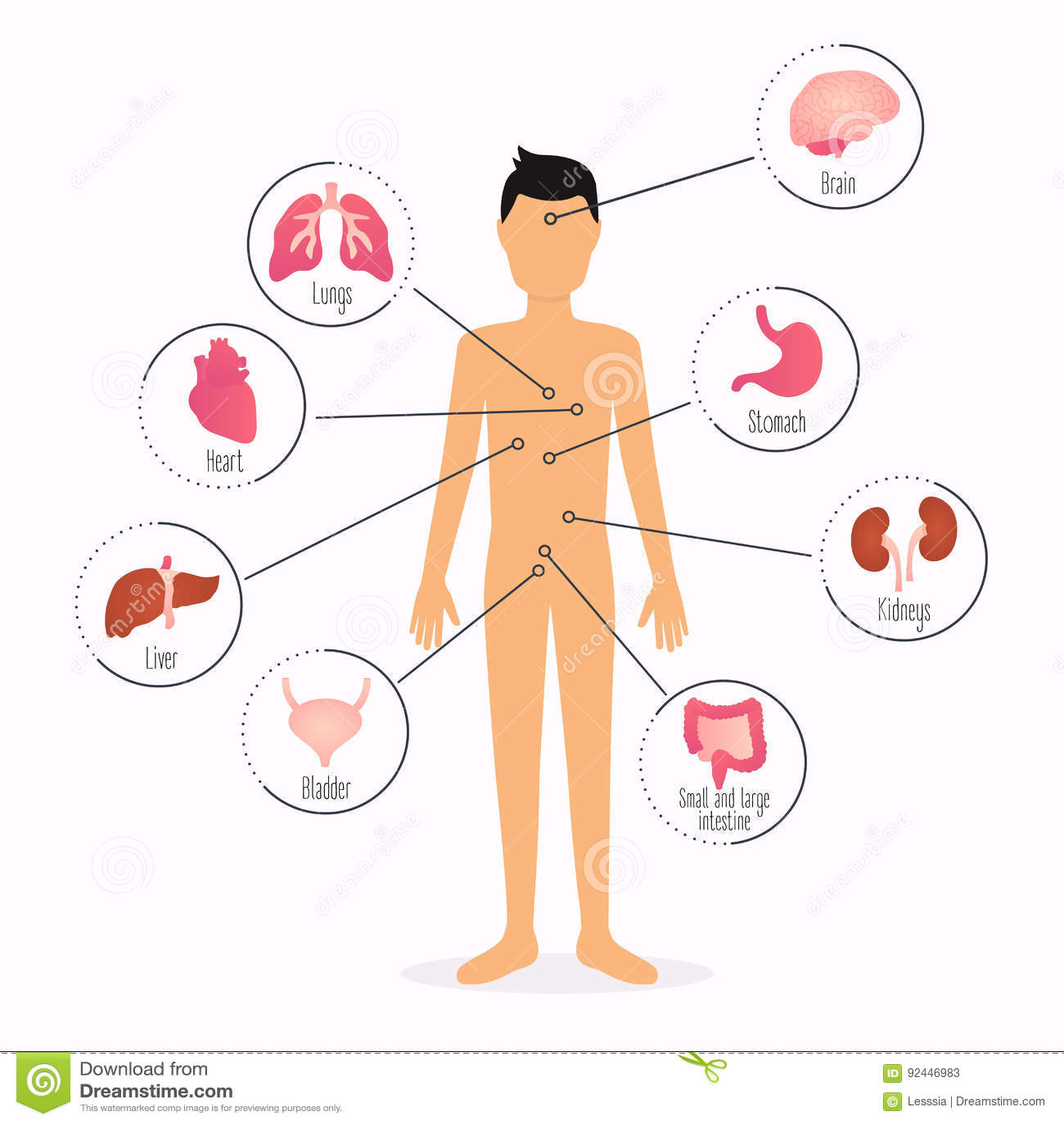 Human Body With Internal Organs Human Body Health Care Infograp