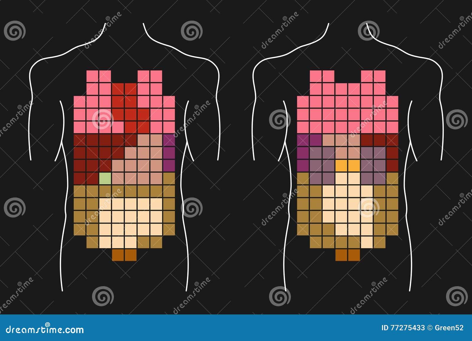 Human Body Internal Organs Stock Vector Illustration Of Internal