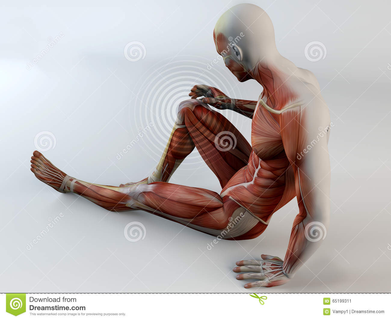 human knee pain stock photography - image: 23315772, Muscles