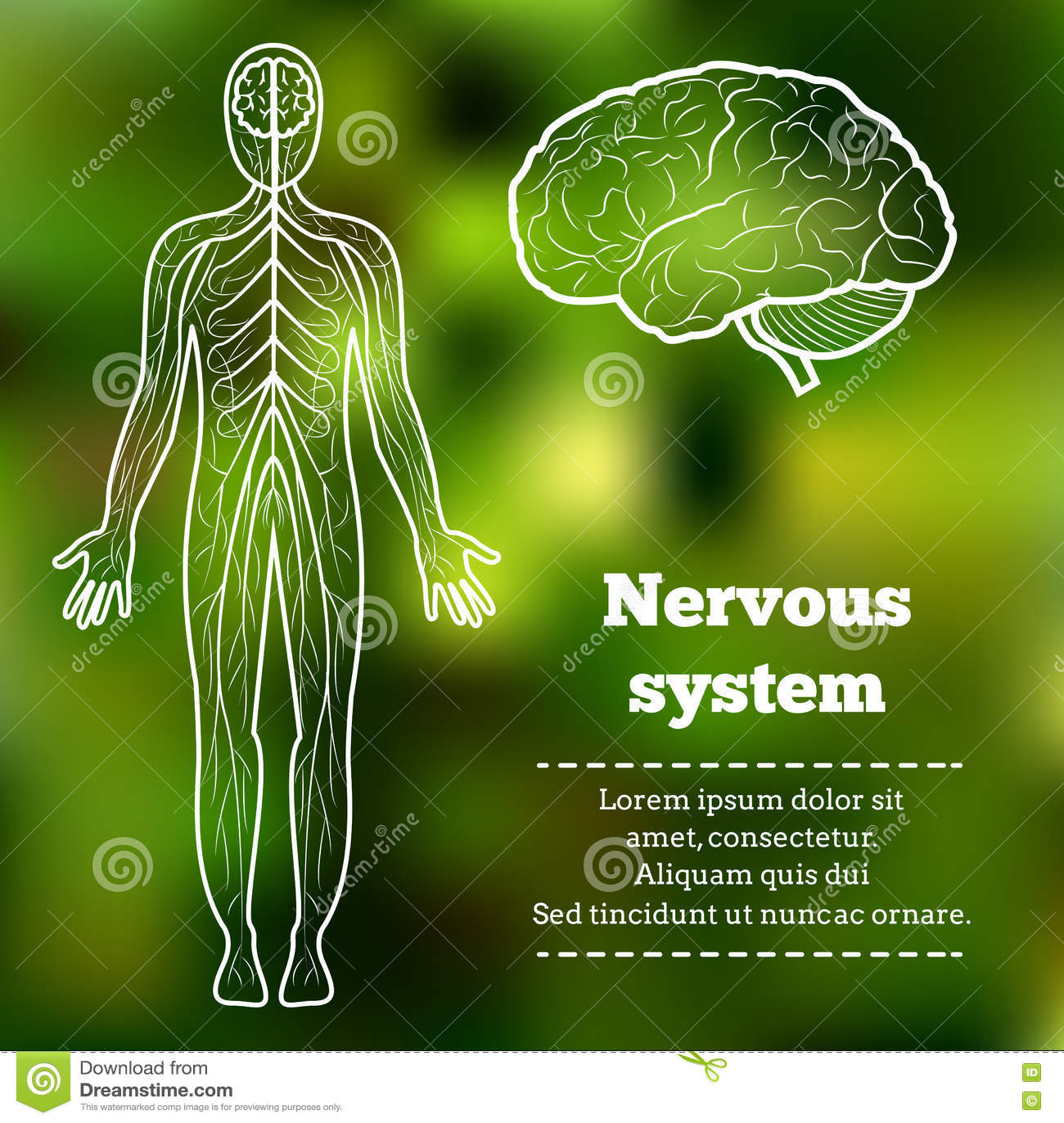 Human body nervous system stock vector. Illustration of sensory ...