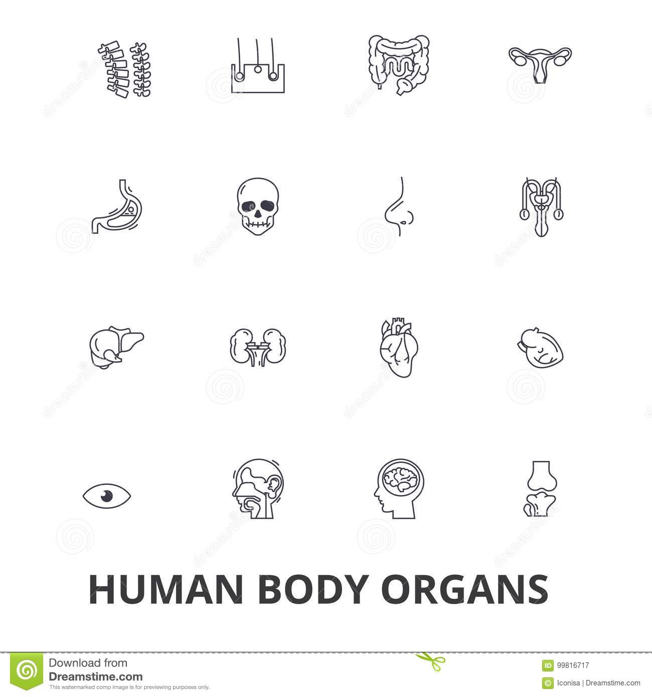 Human Body Organs, Human Body, Medical, Human Anatomy, Body System ...