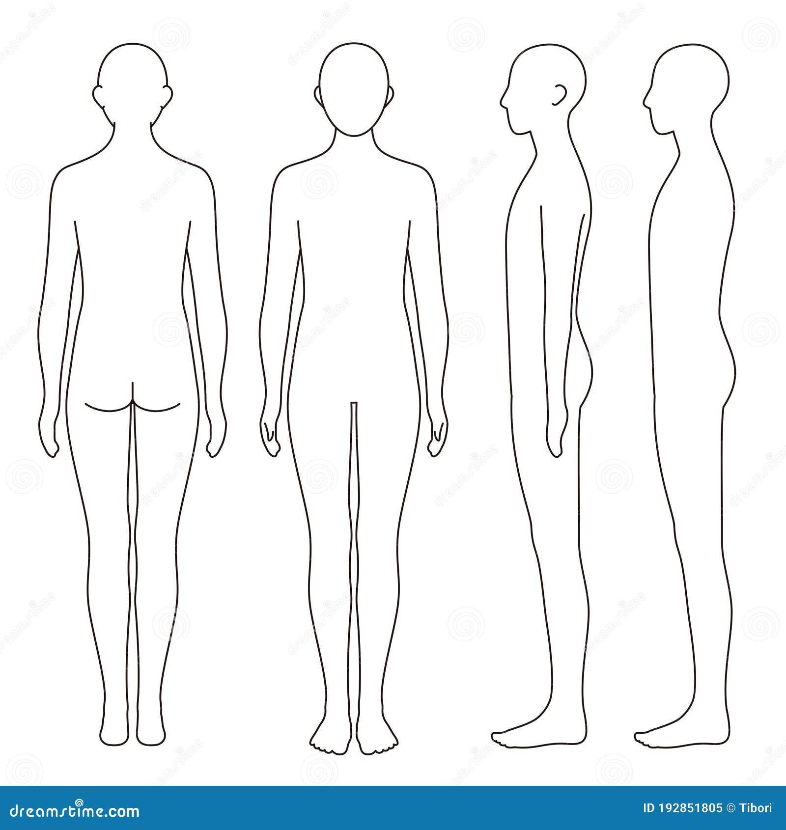 human body outline front back stock illustrations – 496 human body outline  front back stock illustrations, vectors & clipart - dreamstime  dreamstime.com