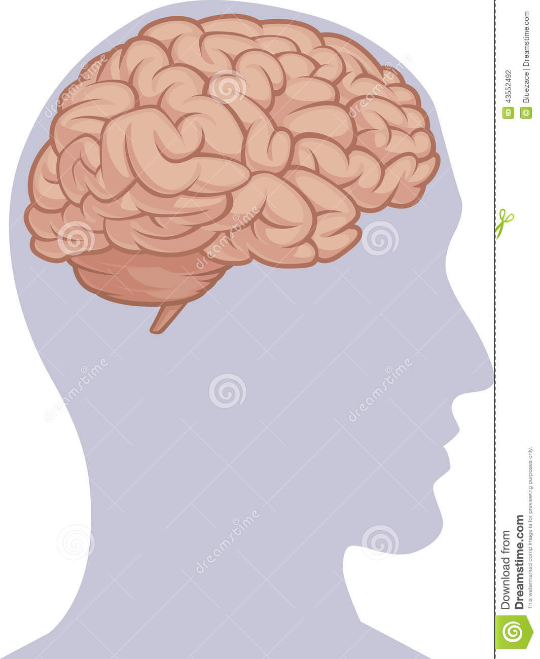 Human Body Part Brain Inside Head Silhouette Stock Vector