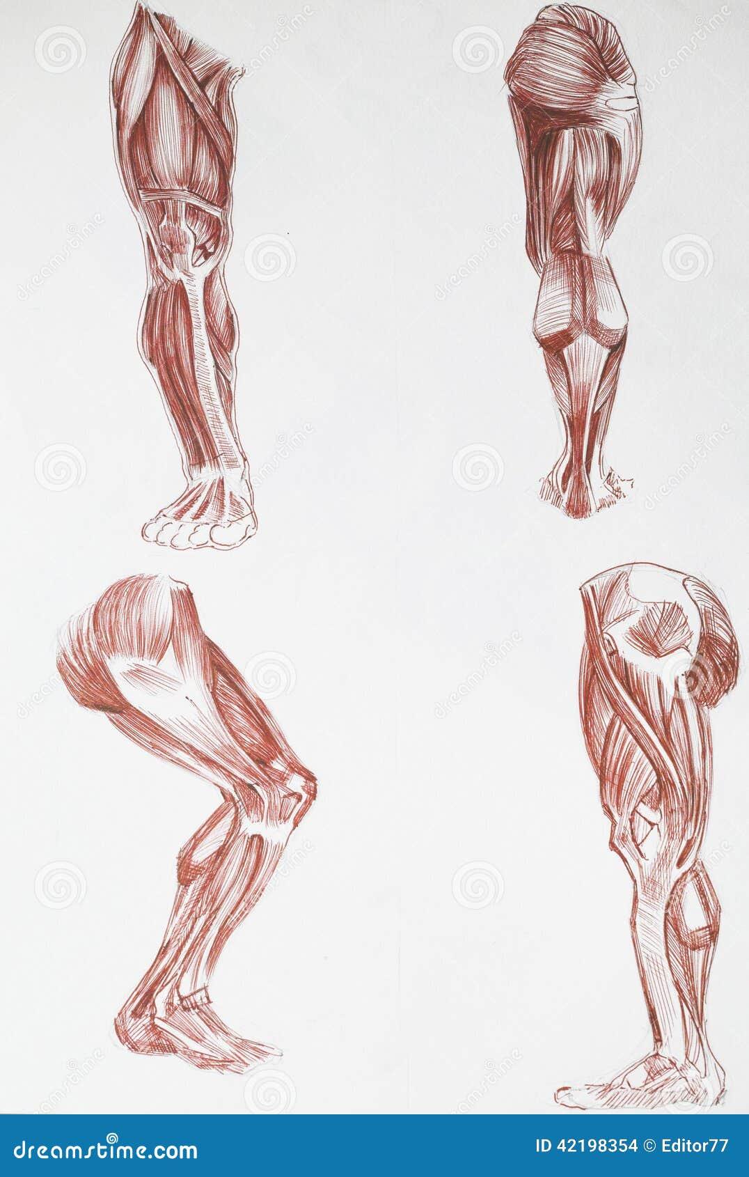 Human Body Parts Stock Illustration Illustration Of Human 42198354