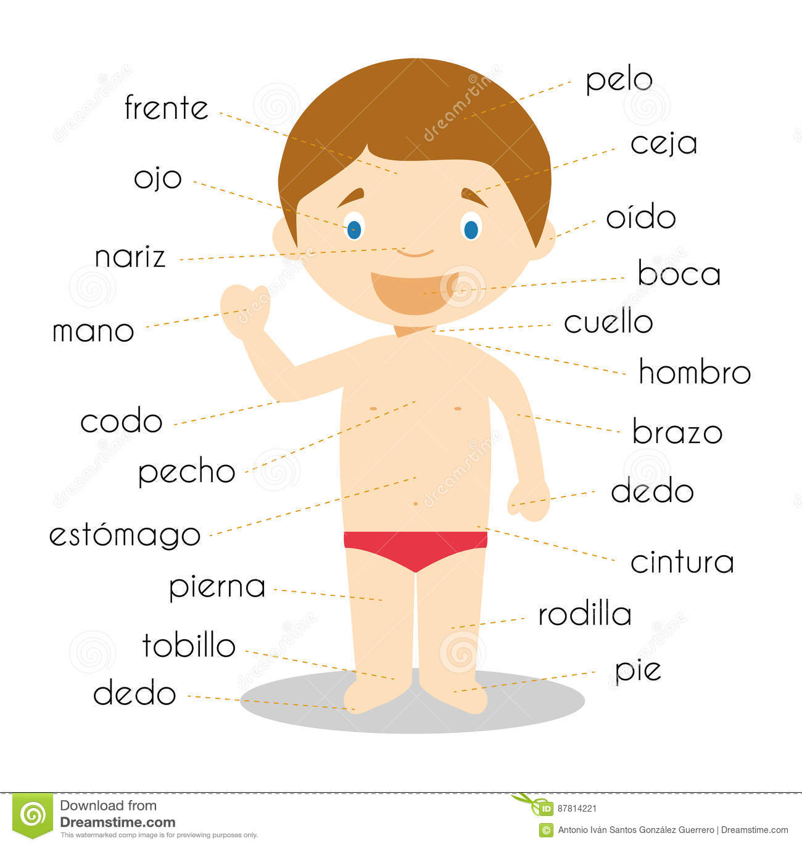 Spanish anatomy terms