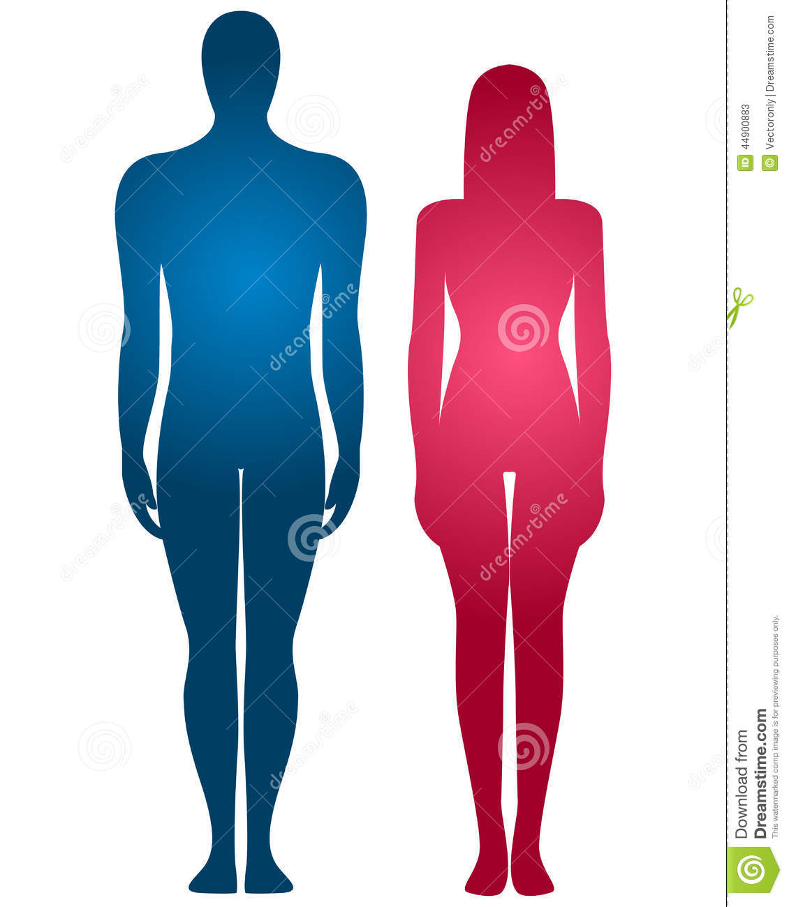 Male And Female Bodies Stock Illustration - 89.2KB