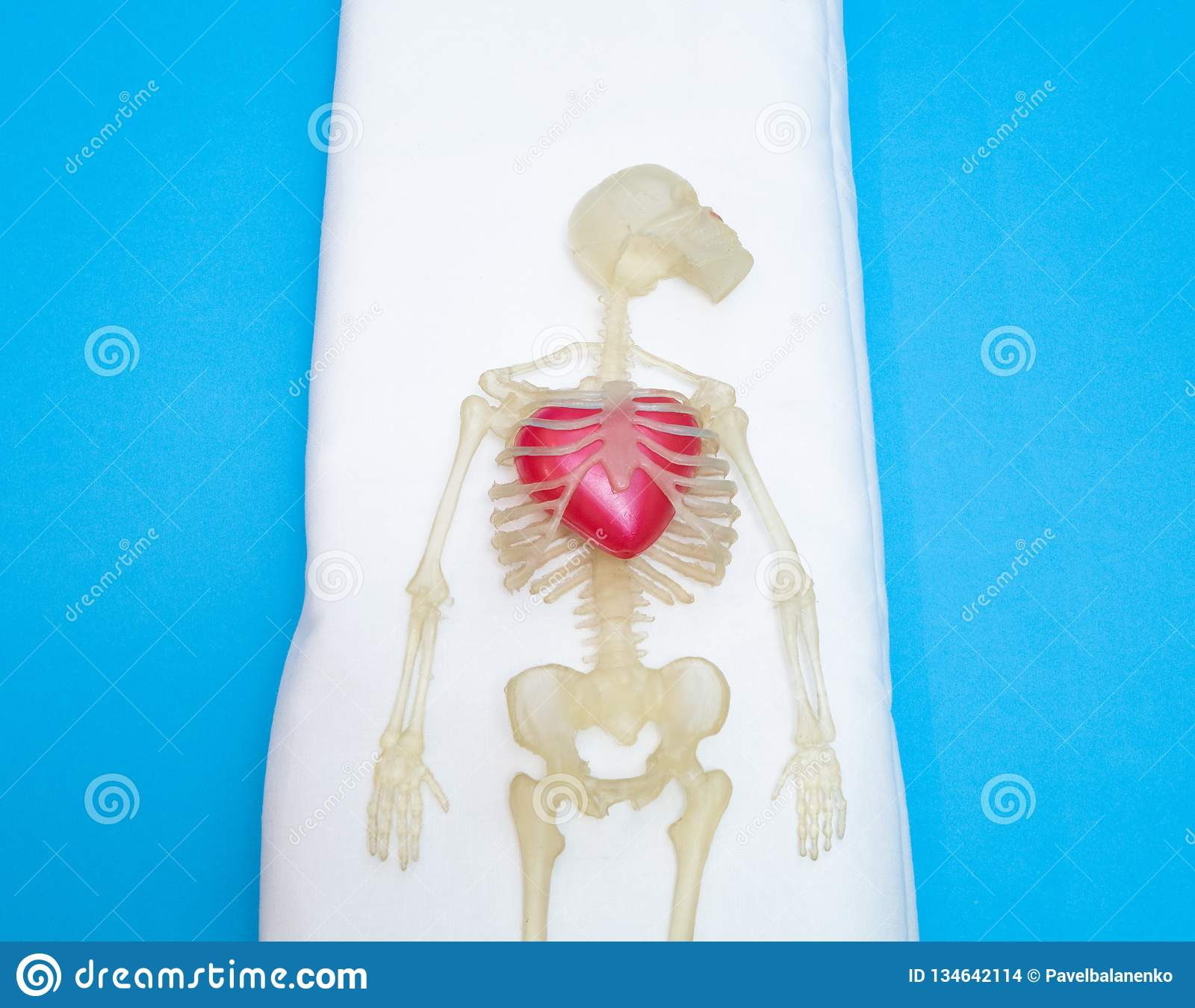 Human Body Skeleton With Big Red Heart Stock Photo Image Of Corpse